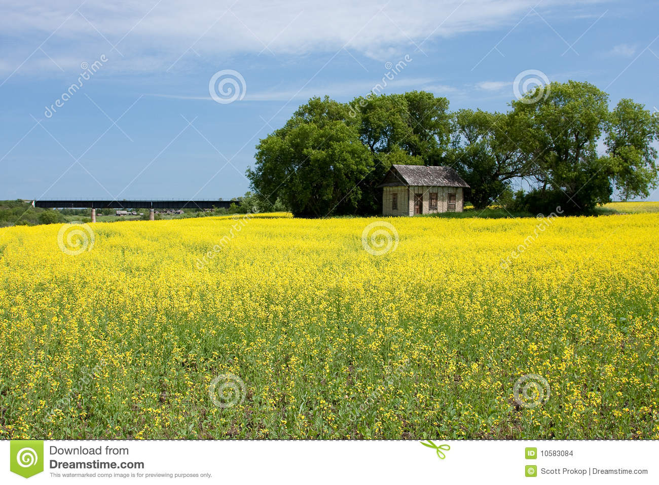 Surrounded By Canoloa Feilds Quotes: Canola Field With Old Farm House Stock Images