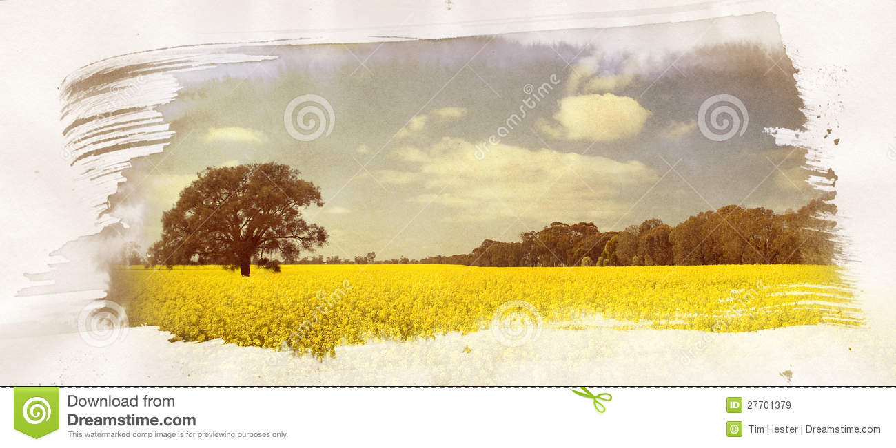 Canola Field Painting
