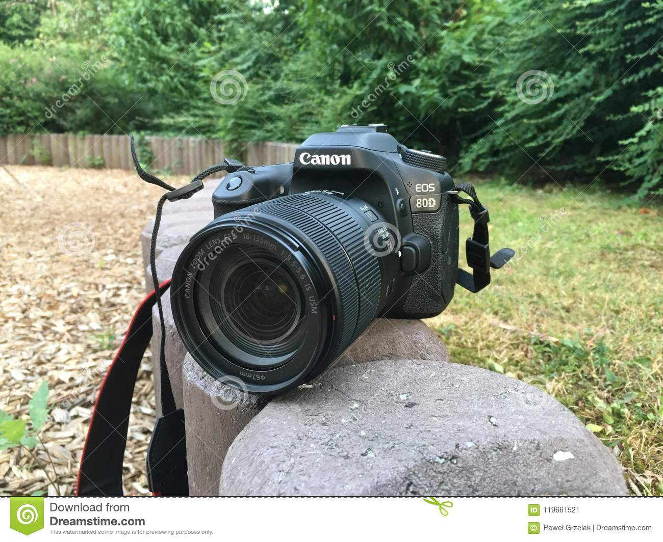 Canon 80d in nature editorial photo  Image of nature - 119661521