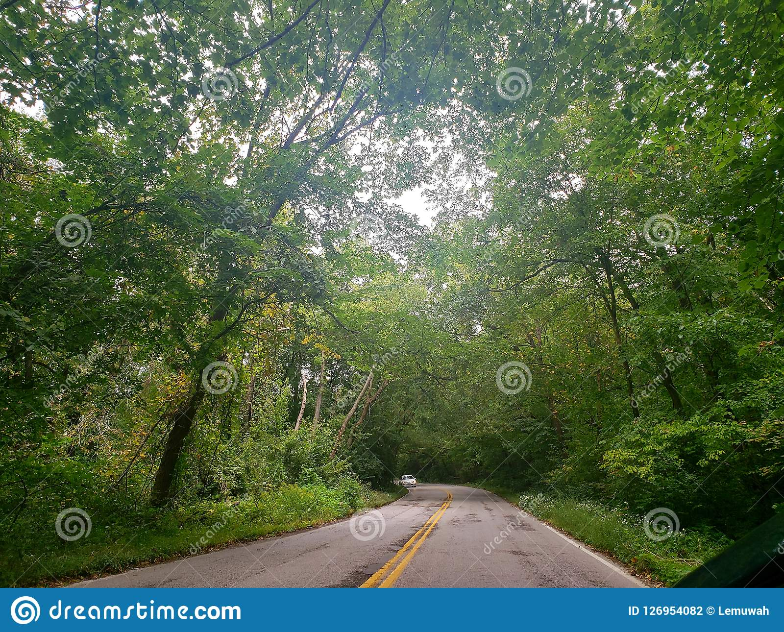 Canopy road & Canopy road stock photo. Image of roads road blue - 126954082