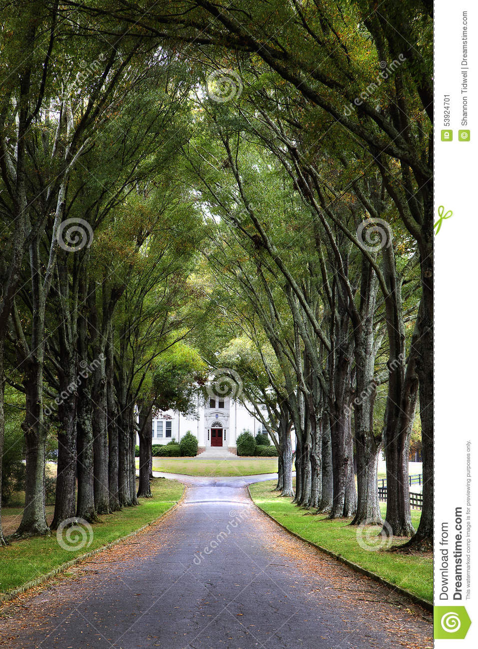 Canopy of trees over road to historic home stock photo for Canopy of trees