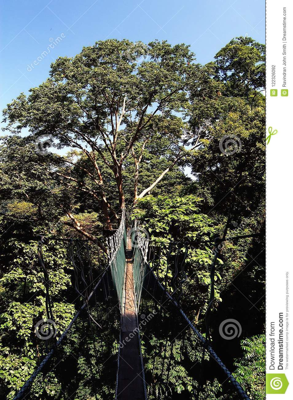 Canopy walk at Forest Research Institute Malaysia. The Forest Research Institute Malaysia is a statutory agency of the Government of Malaysia ... & Canopy Walk - FRIM editorial photography. Image of institute - 122326092
