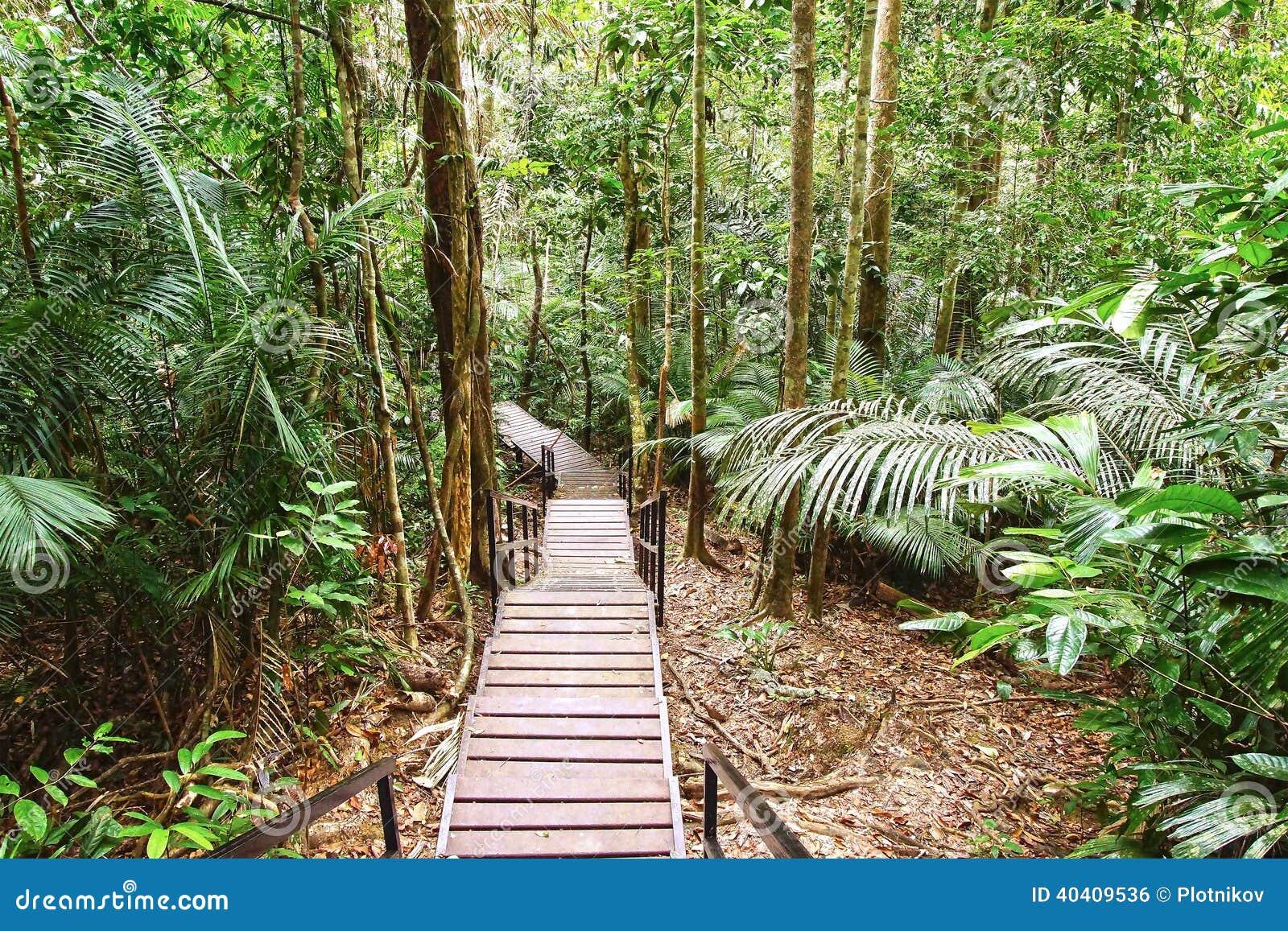 Canopy walk. Malaysia. Danger lush. & Canopy walk. Malaysia stock photo. Image of danger canopy - 40409536