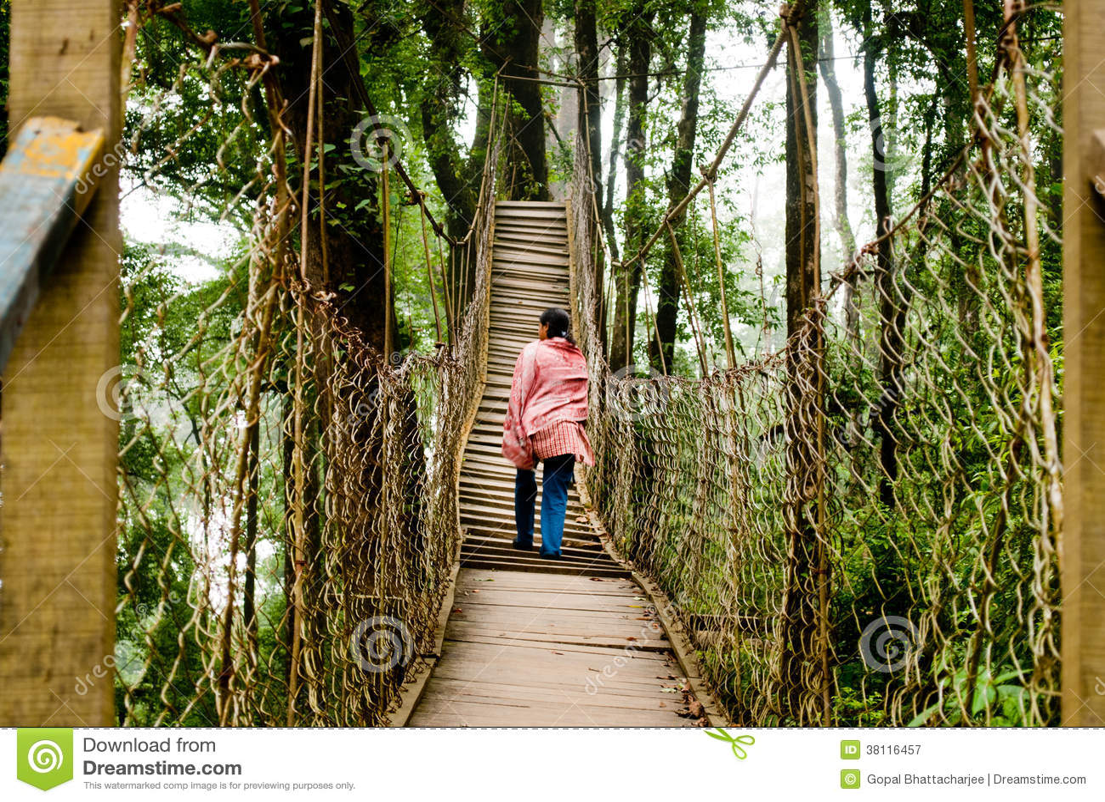The Canopy Walk Way