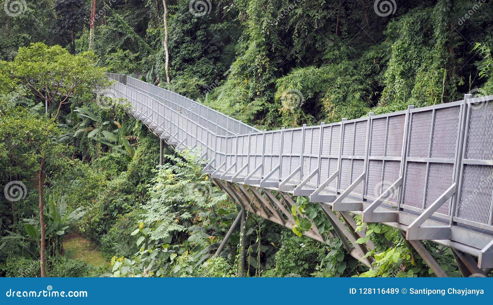 Canopy walks to explore nature. Canopy walks at Queen sirikit botanic garden Chiang Mai Thailand & Canopy Walks To Explore Nature. Canopy Walks At Queen Sirikit ...