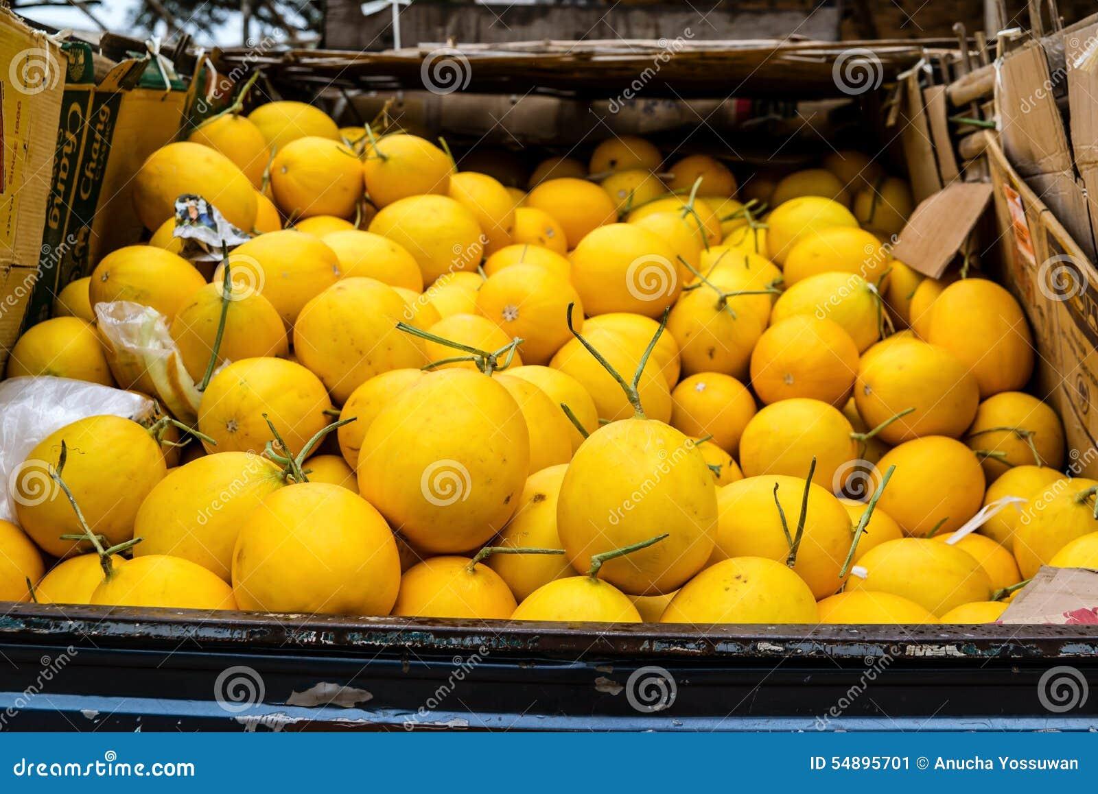 Cantalupo para la venta
