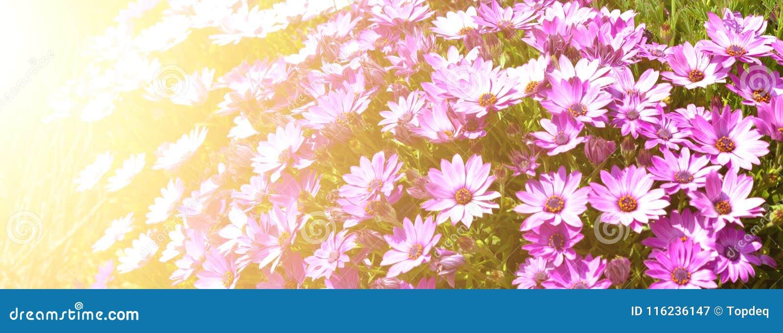 Canteiro de flores brilhante