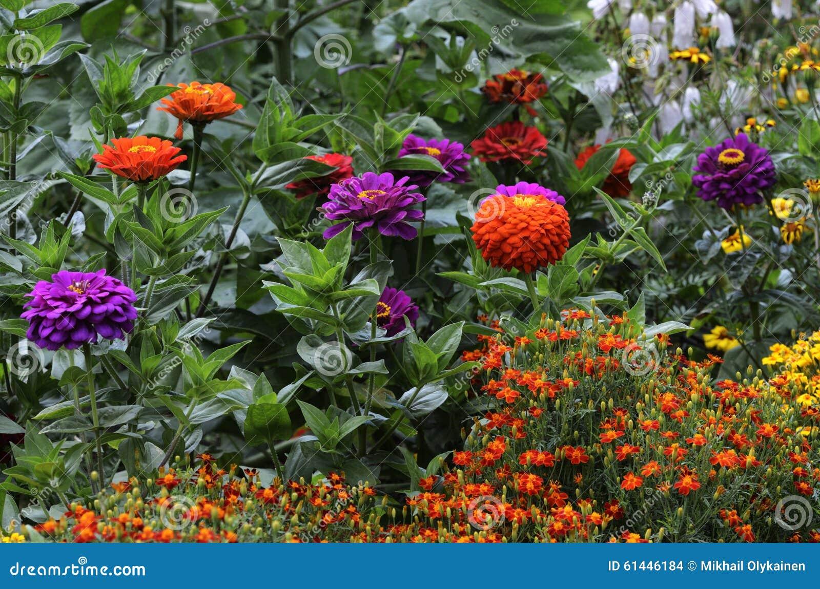 fotos jardim horizontal : fotos jardim horizontal: De Flores Colorido Bonito No Jardim Foto de Stock – Imagem: 61446184