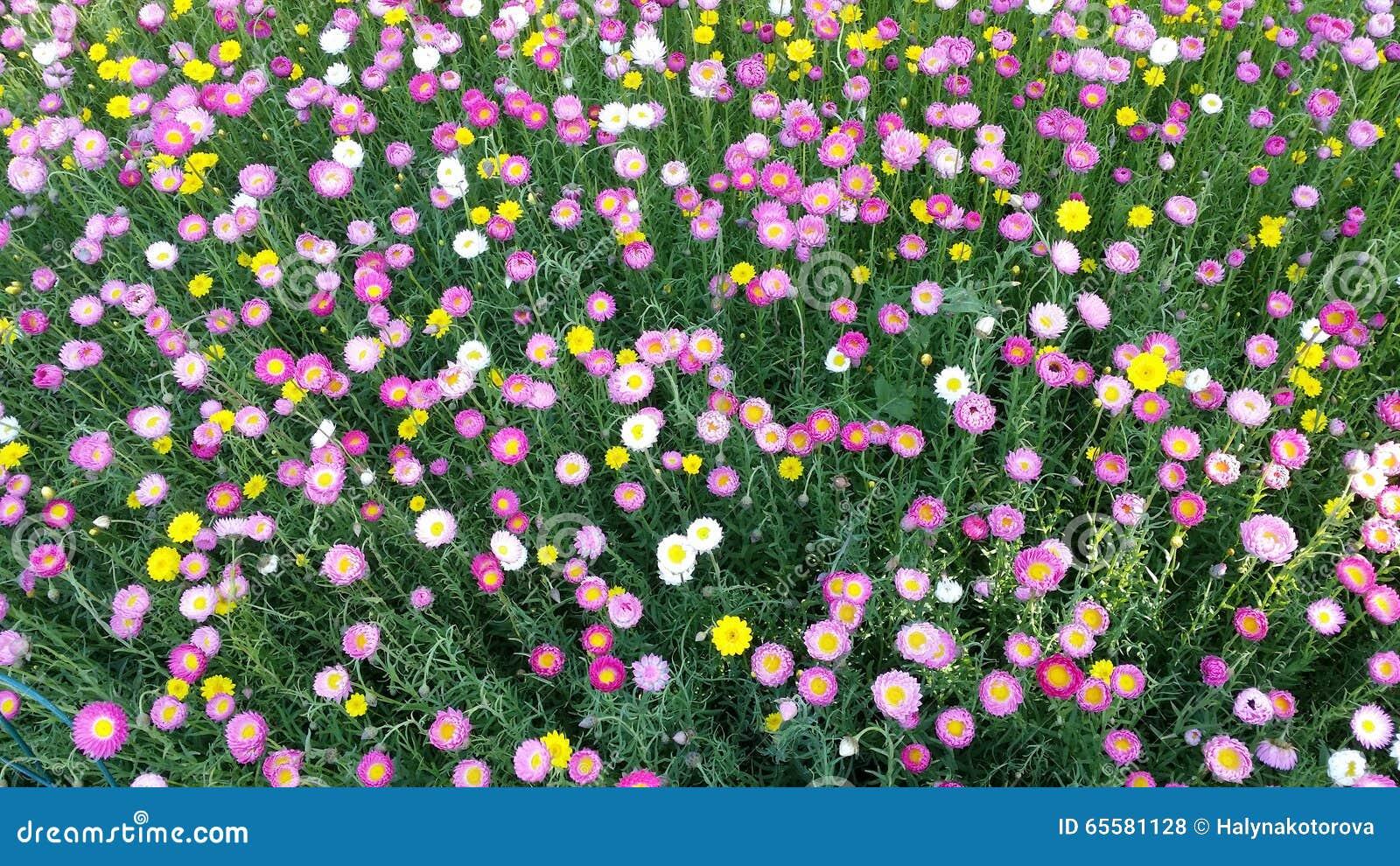 Canteiro de flores colorido em Sydney Botanical Garden