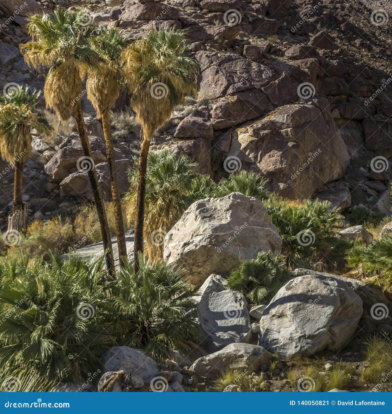 Canyon della palma al parco di stato di Anza Borrego, California