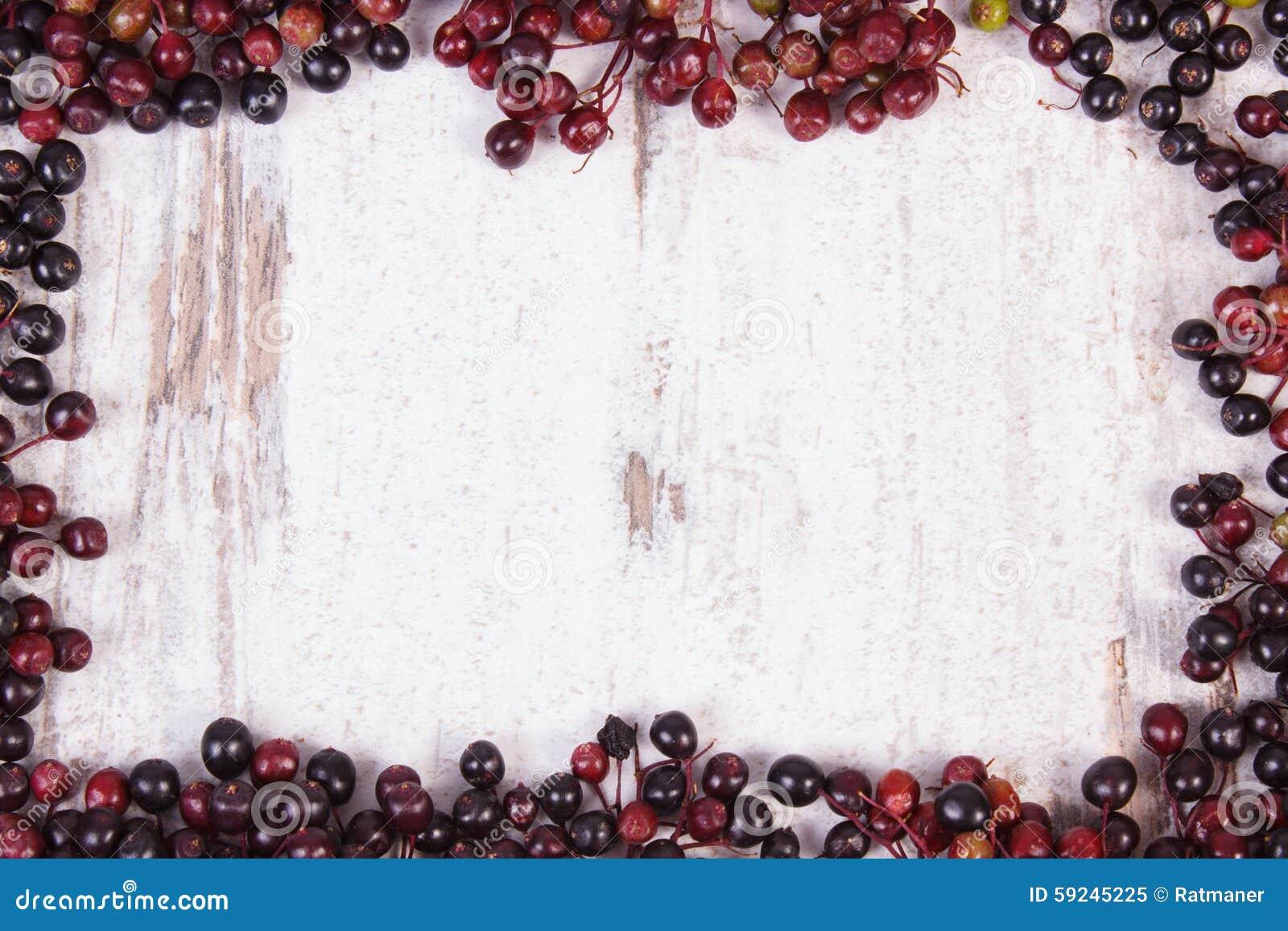 Capítulo de la baya del saúco del otoño y del espacio frescos de la copia para el texto