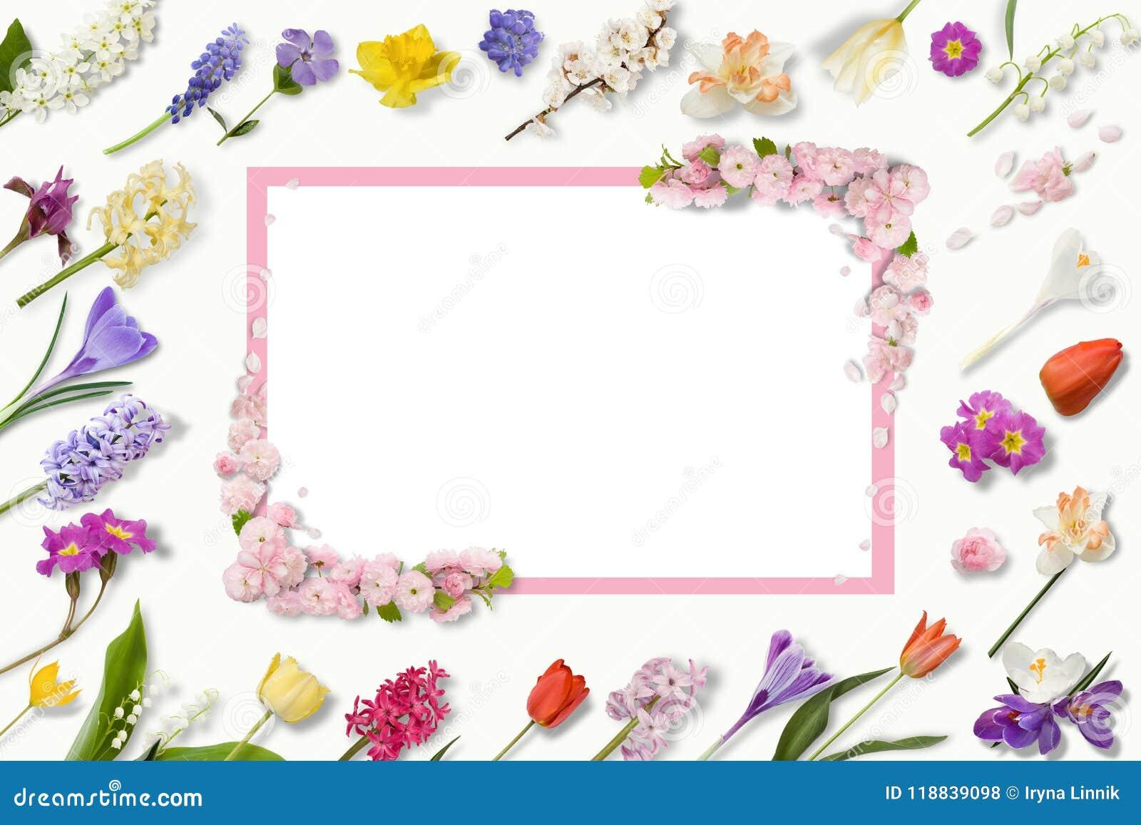 Capítulo de las flores multicoloras, hojas verdes, ramas en el fondo blanco Endecha plana, visión superior Modelo floral Modelo