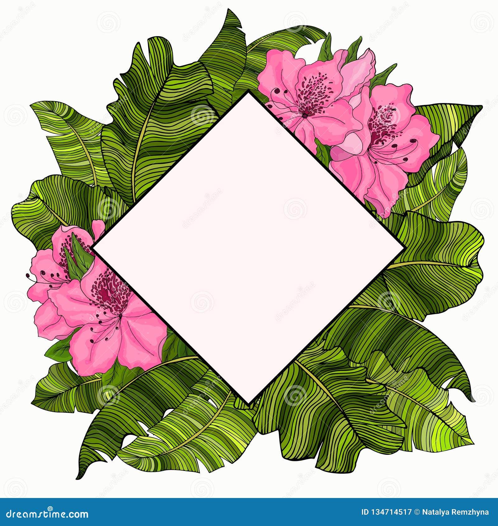 Capítulo para el texto en el diseño de las hojas multicoloras, verdes de un árbol de plátano y de las flores rosadas de la azalea