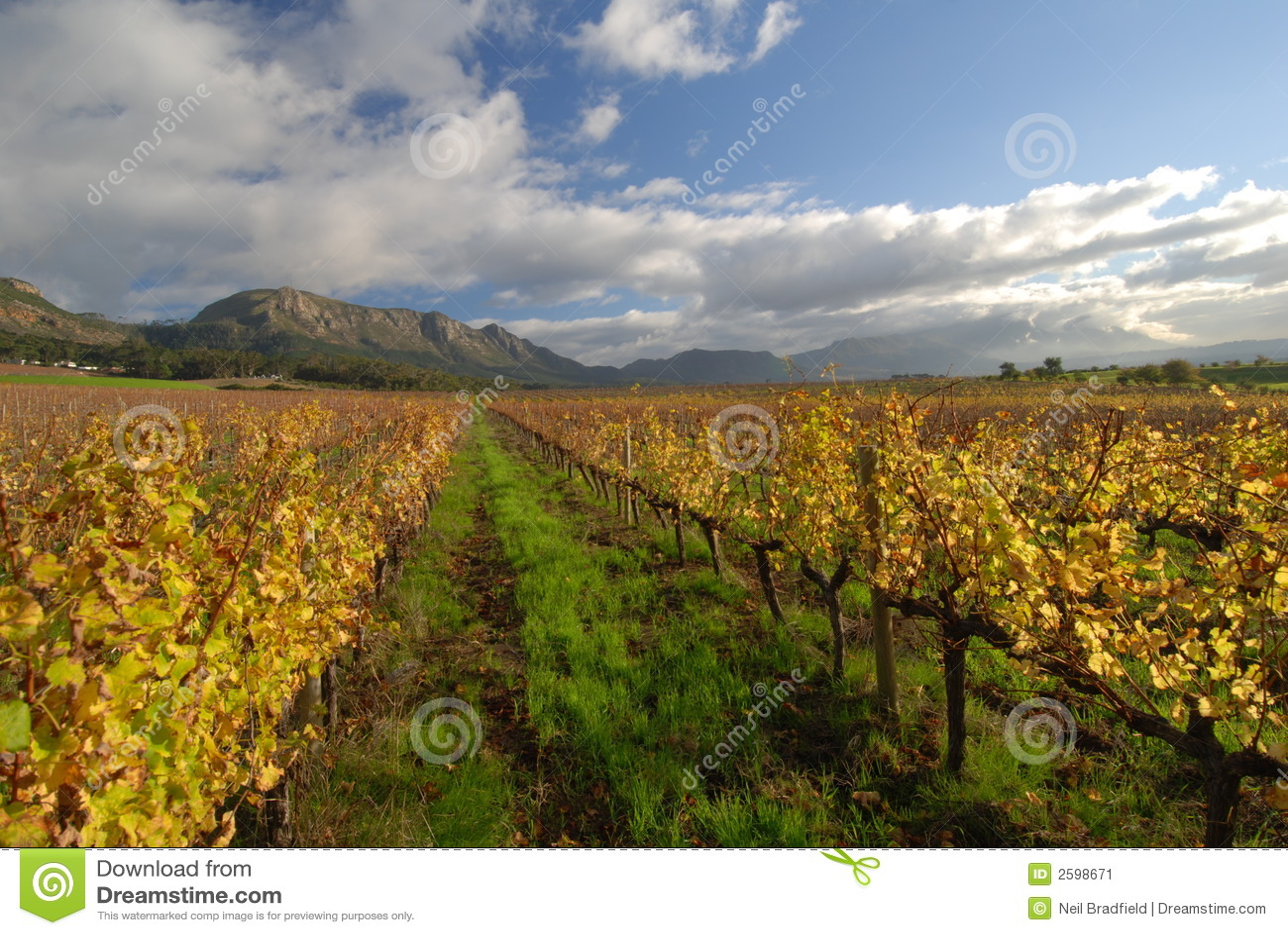 Cape town wine view