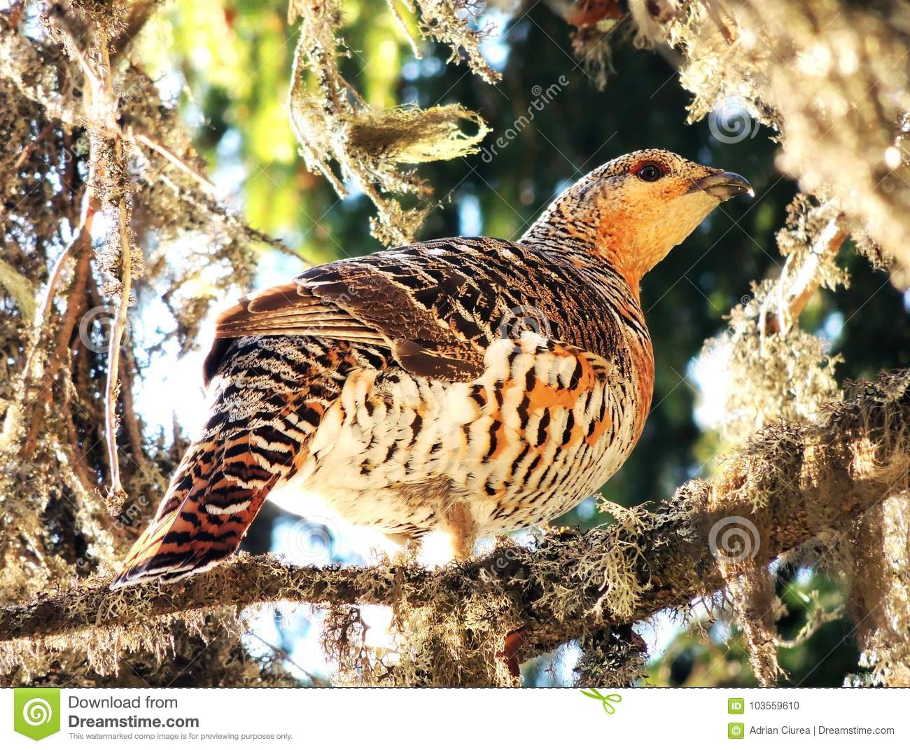How to cook wood grouse in the oven and in the slow cooker 94
