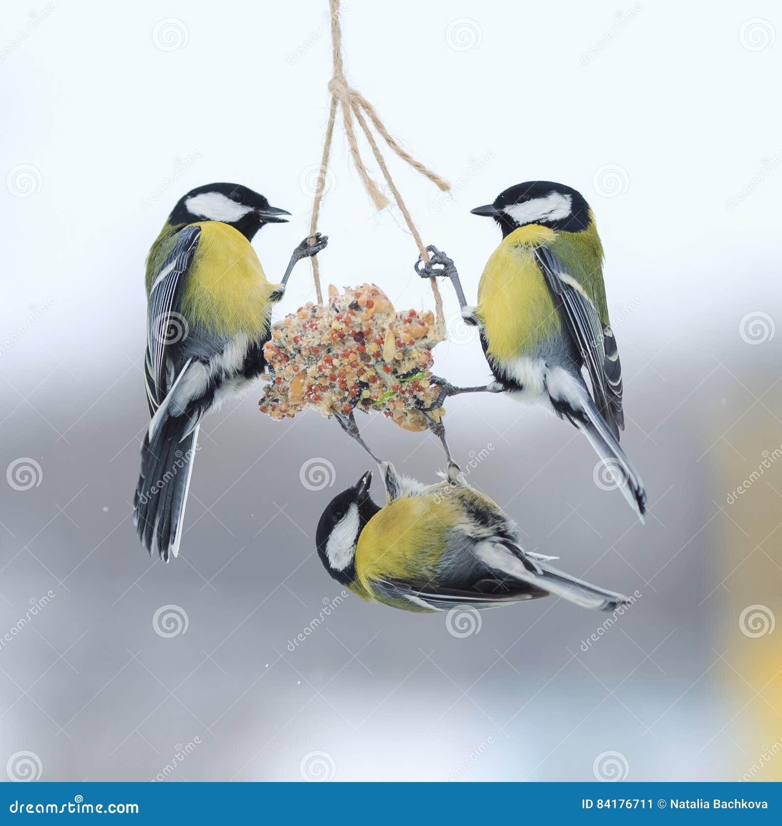 Capezzoli nell inverno da volare e sedersi sull alimentatore