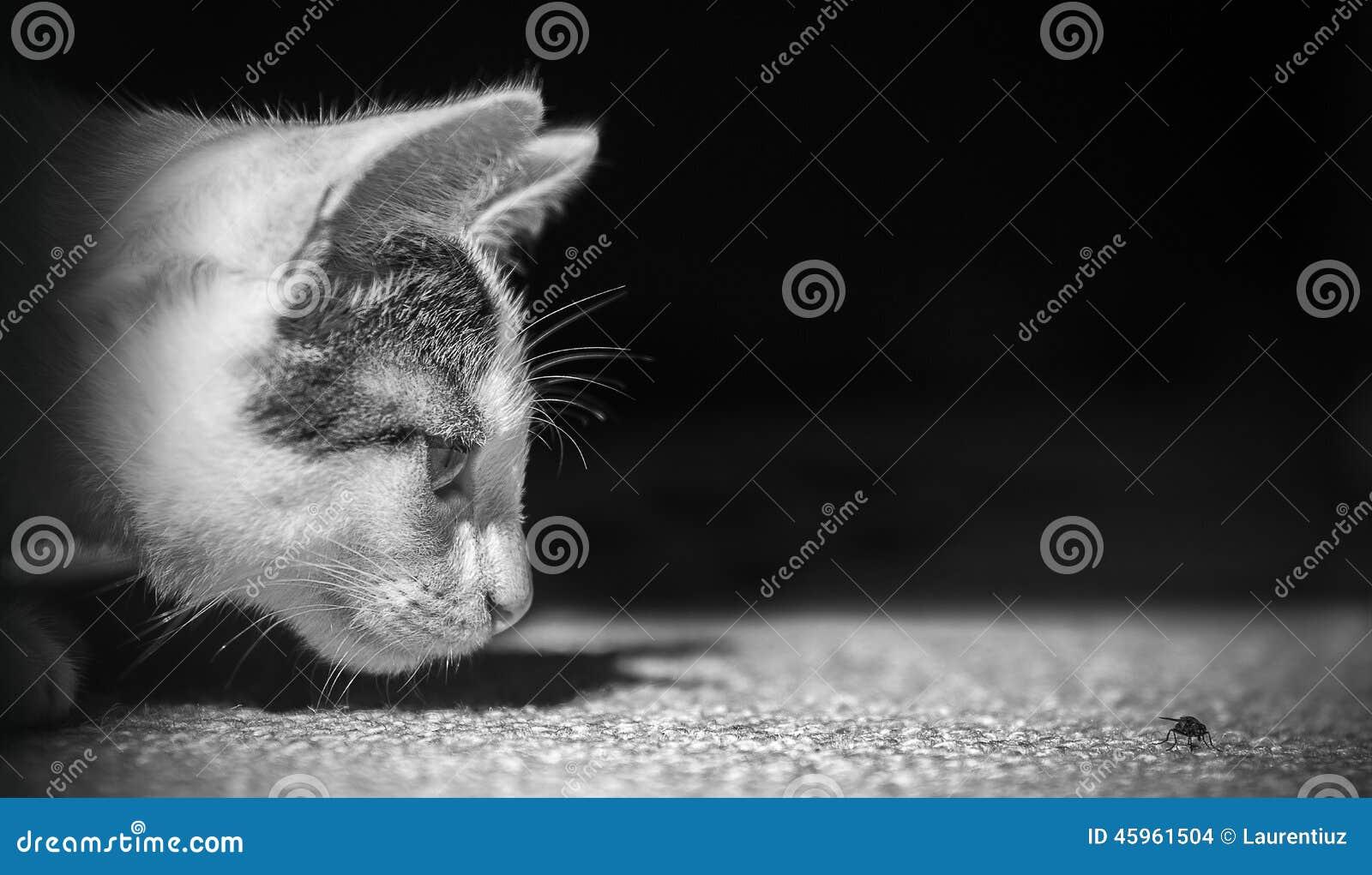 Captura da mosca do animal de animal de estimação da caça do gato