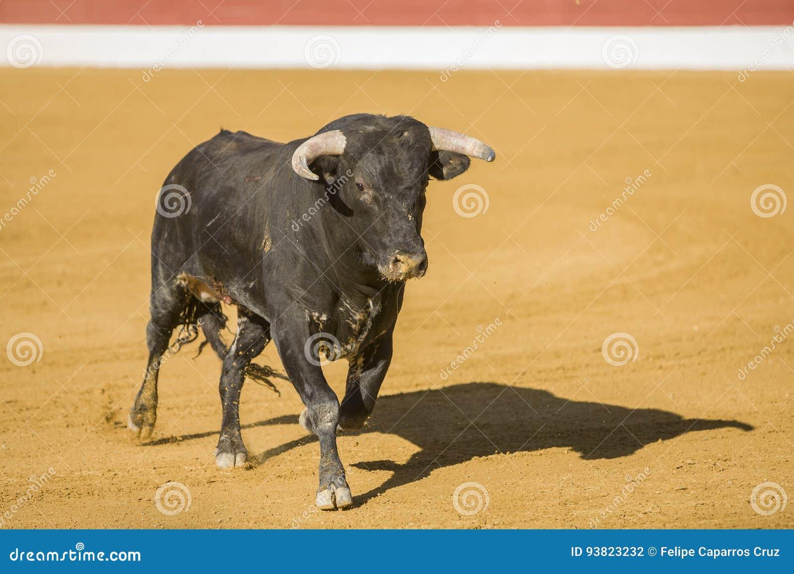 Captura de la figura de un toro valiente en una corrida