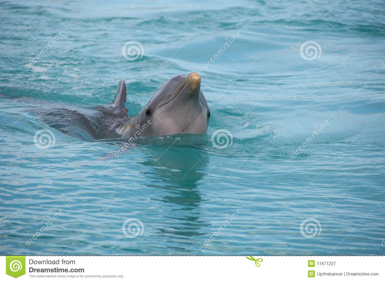 Capture Of Dolphin In A Water Pool Royalty Free Stock