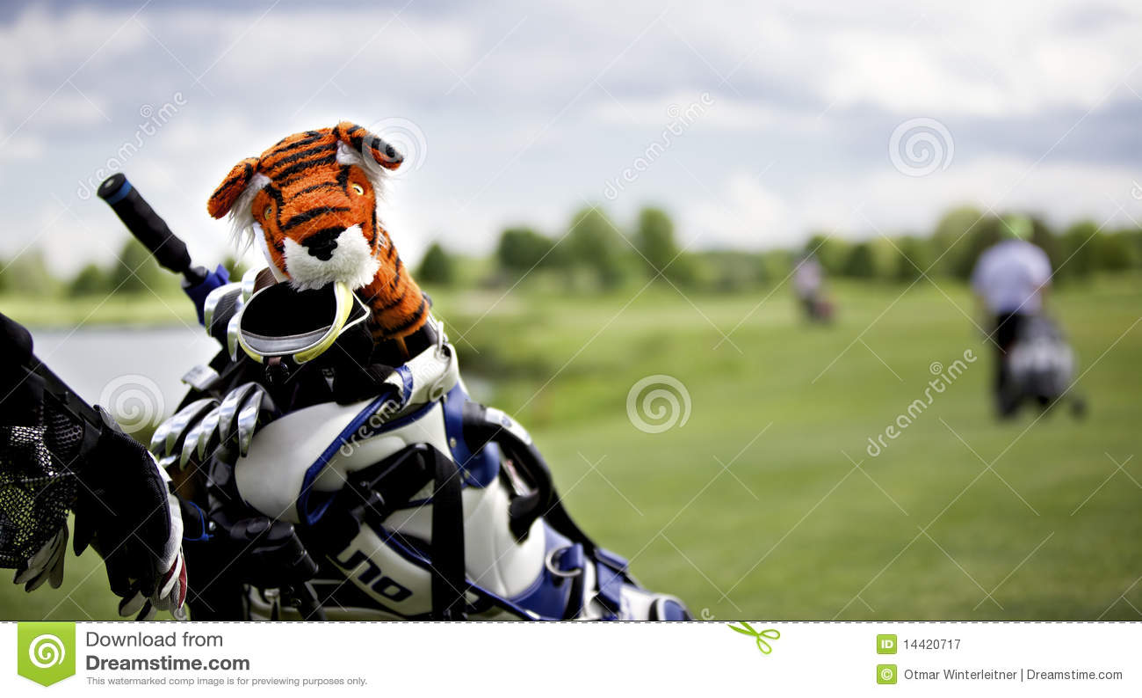 capuchon de protection de tigre sur le club de golf image. Black Bedroom Furniture Sets. Home Design Ideas