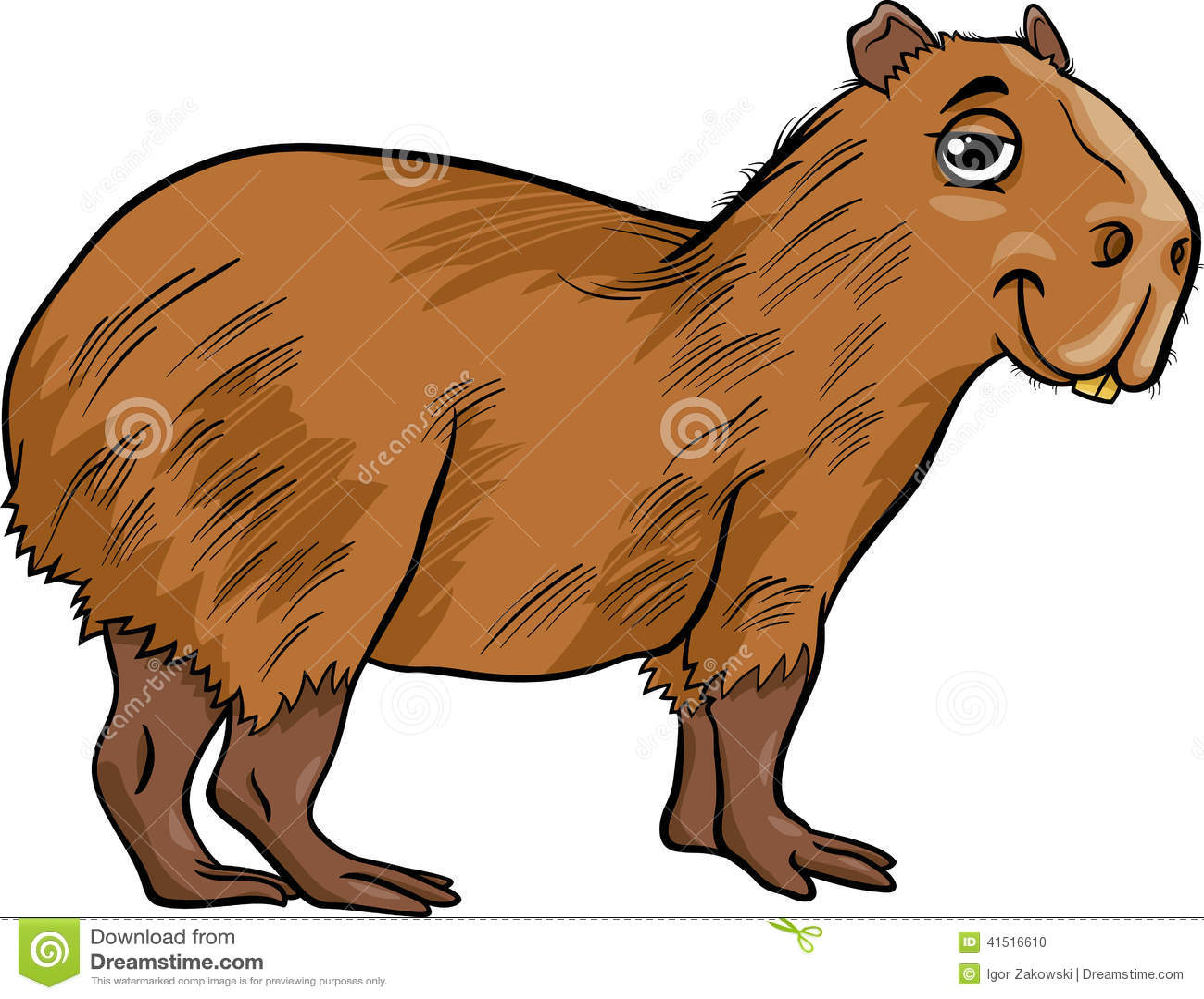 Capybara Animal Cartoon Illustration Stock Vector Image