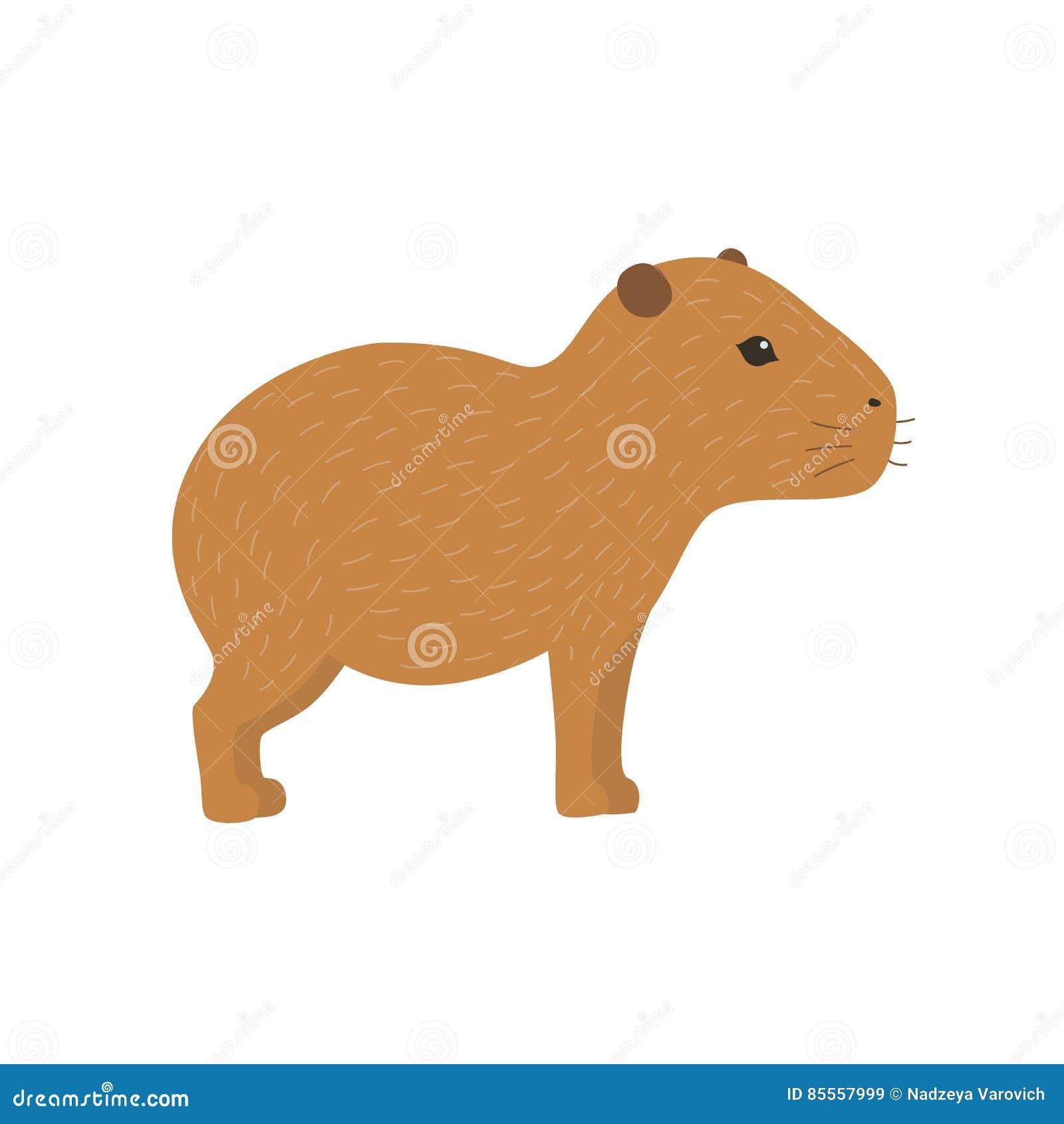 Capybaraillustration