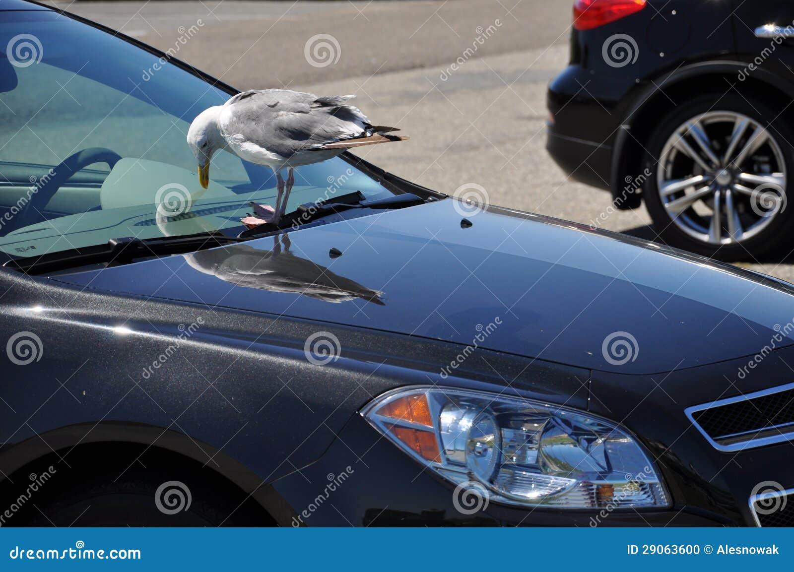 Car and the bird
