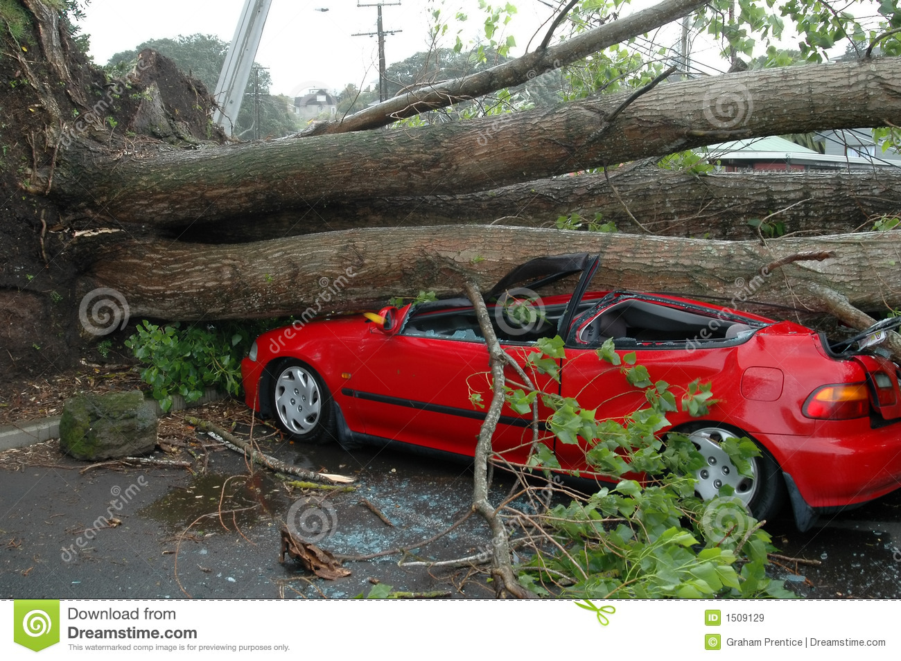 Car Crushed By Tree Royalty Free Stock Images - Image: 1509129