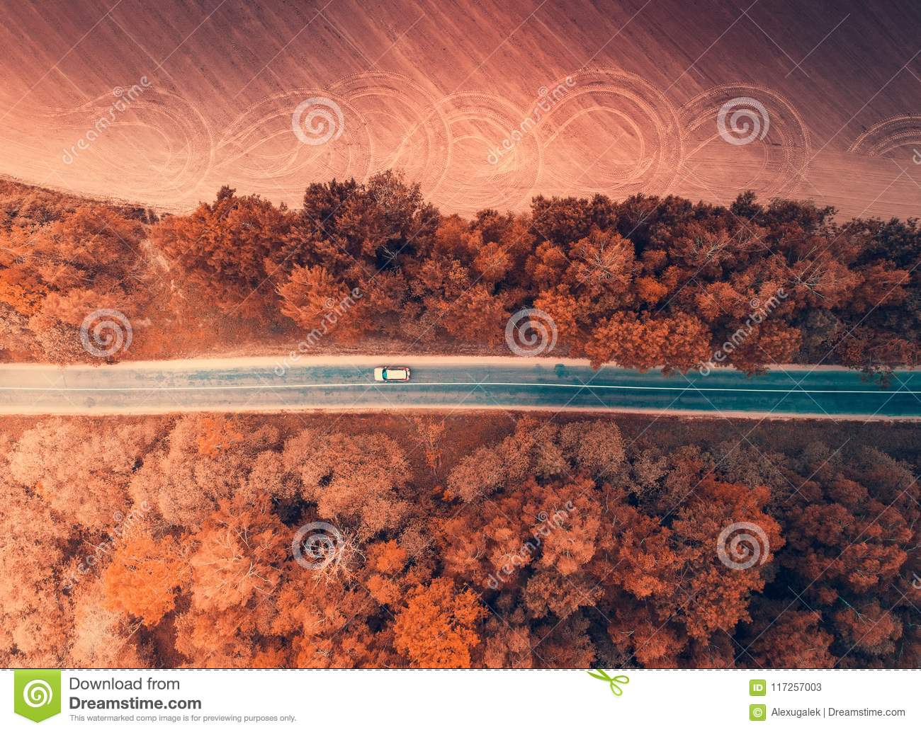 Car moving in autumn forest from above