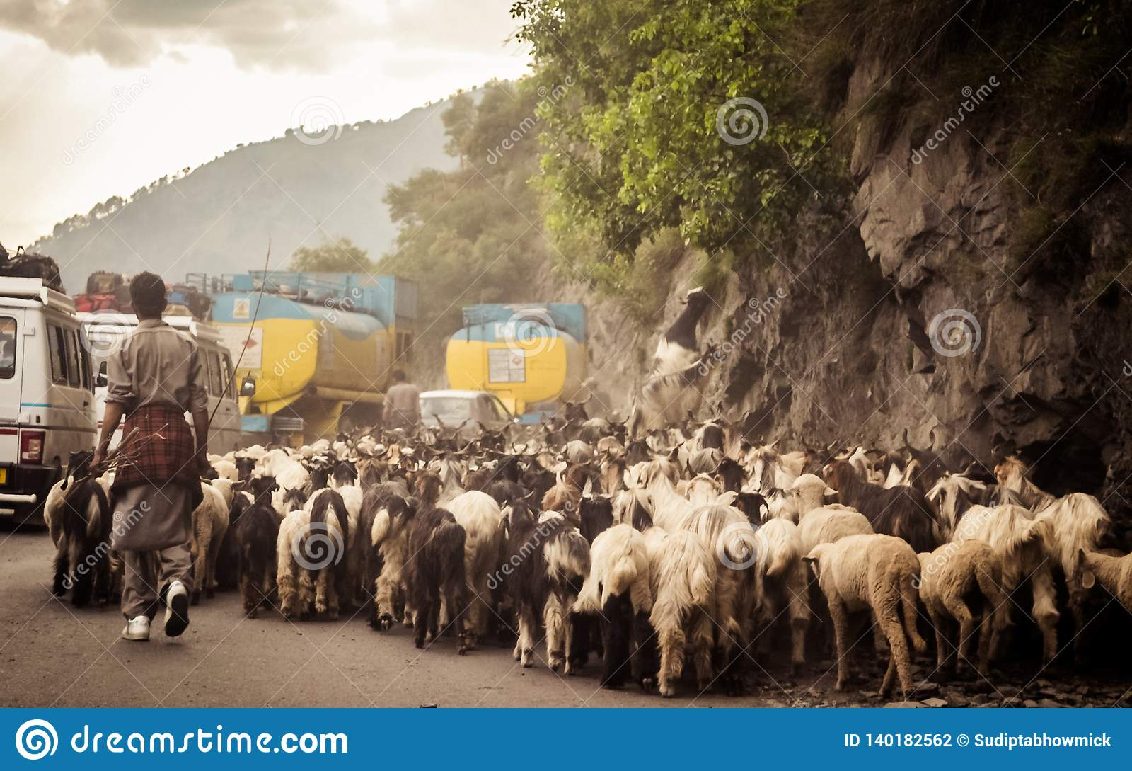 Car Point of view image. A flock of Sheep walking along a country highway in himalayan mountain pass in Leh Ladakh Manali Road of