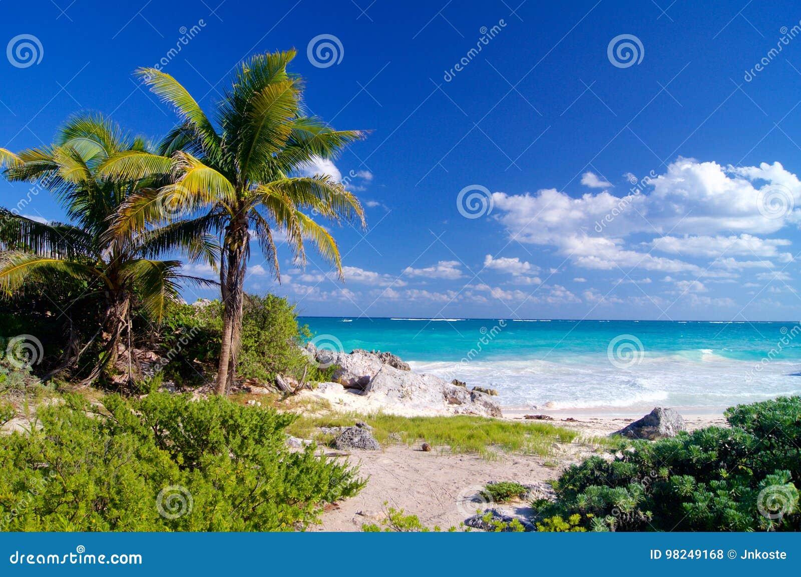 Caraïbisch strand met palmen