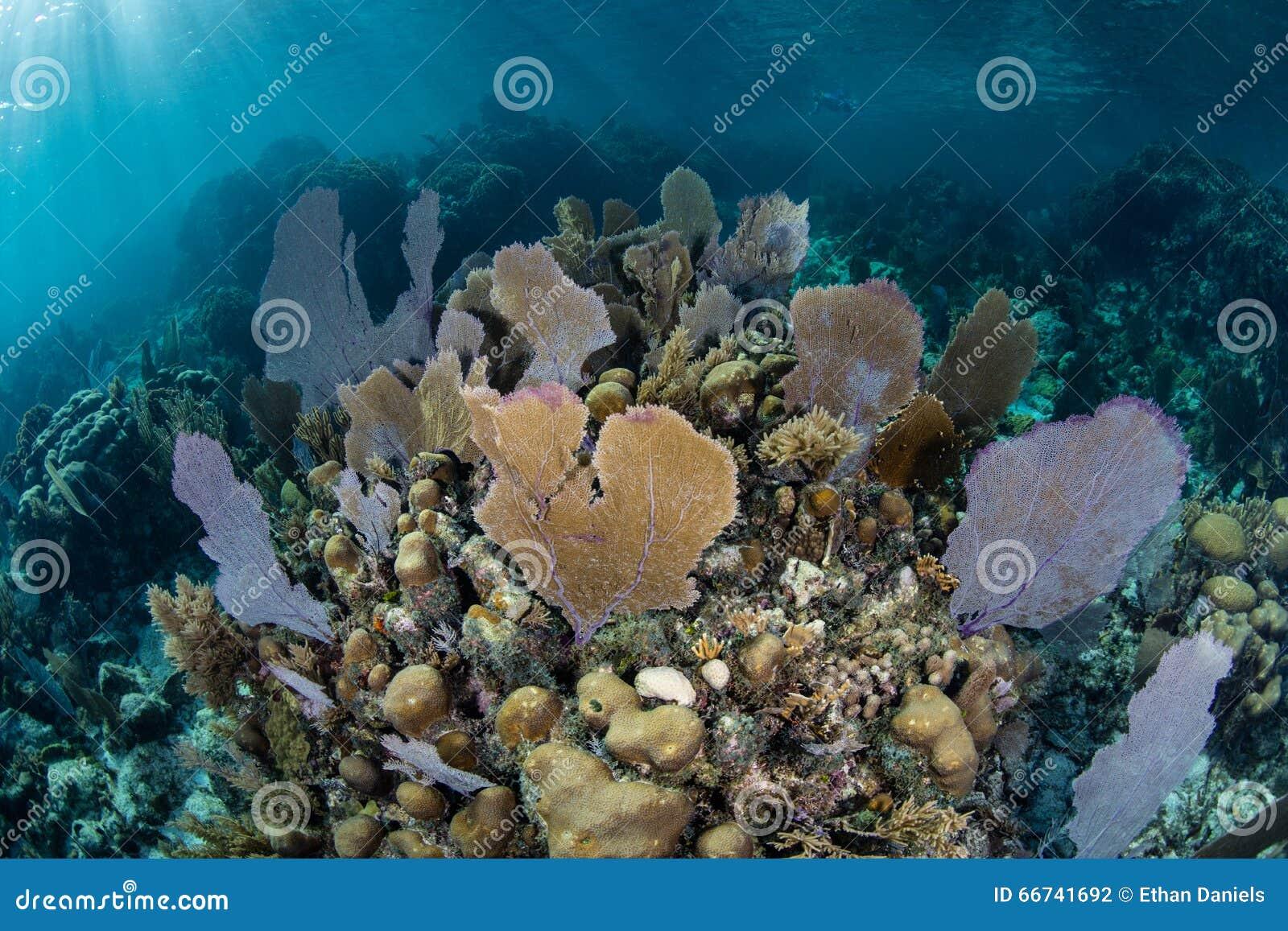 Caraïbische Coral Reef in Ondiep Water