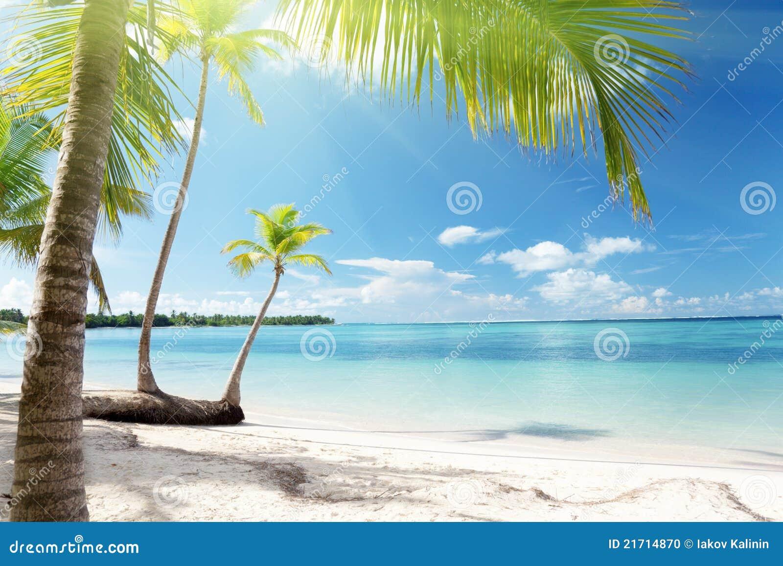 Caraïbische overzees en palmen