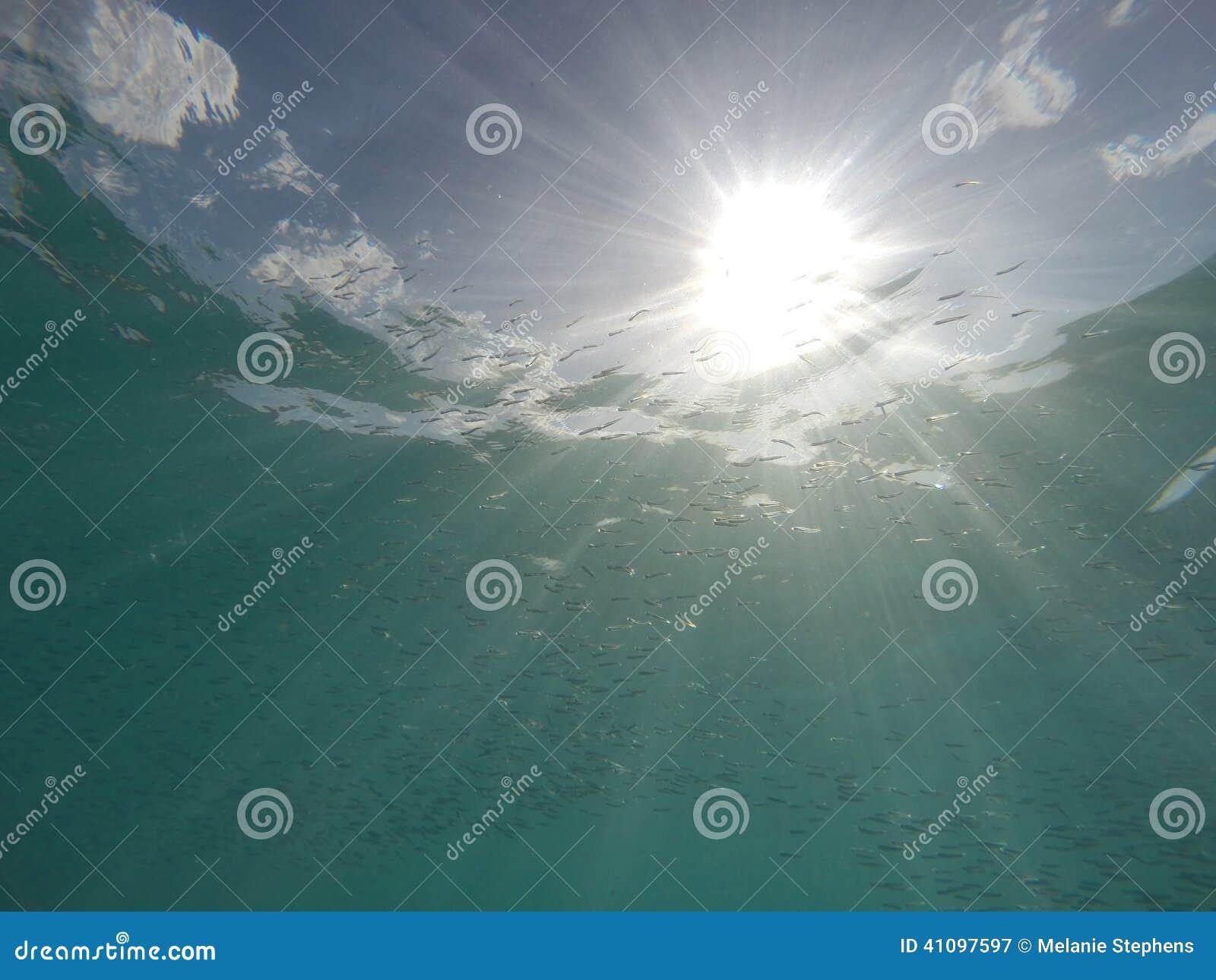 Caraïbische overzees met vissen en zonnestraal