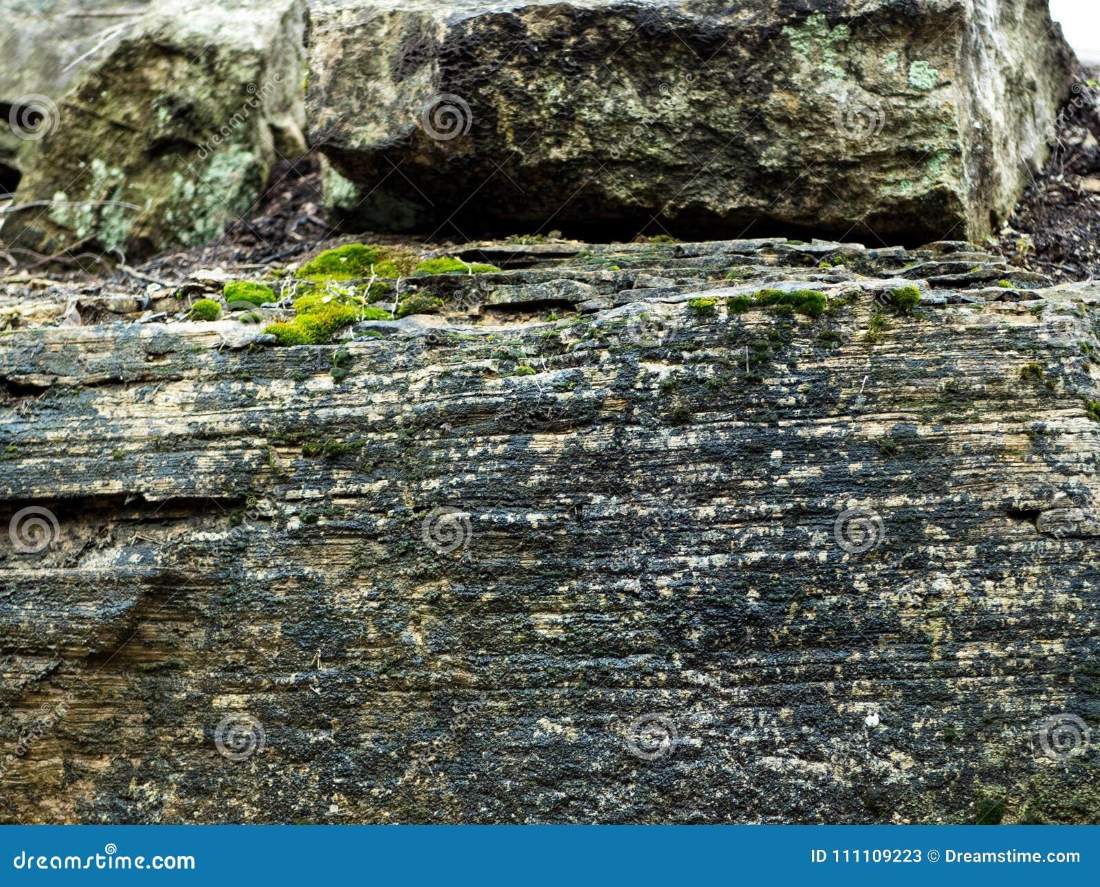 Cara de la roca con el musgo brillantemente coloreado