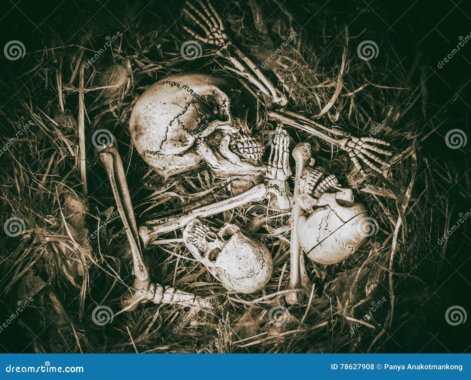 Cara Del Cráneo Del Extracto Tres En Jerarquía Abandonada Del Pájaro ...