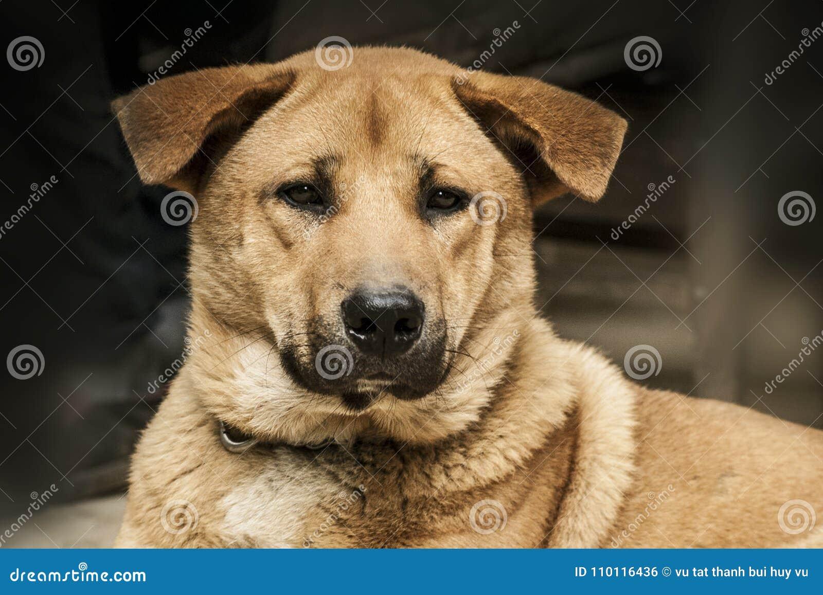 Cara do cão Retrato do animal de estimação animal Animalia Amante animal Amante do cão canine canis