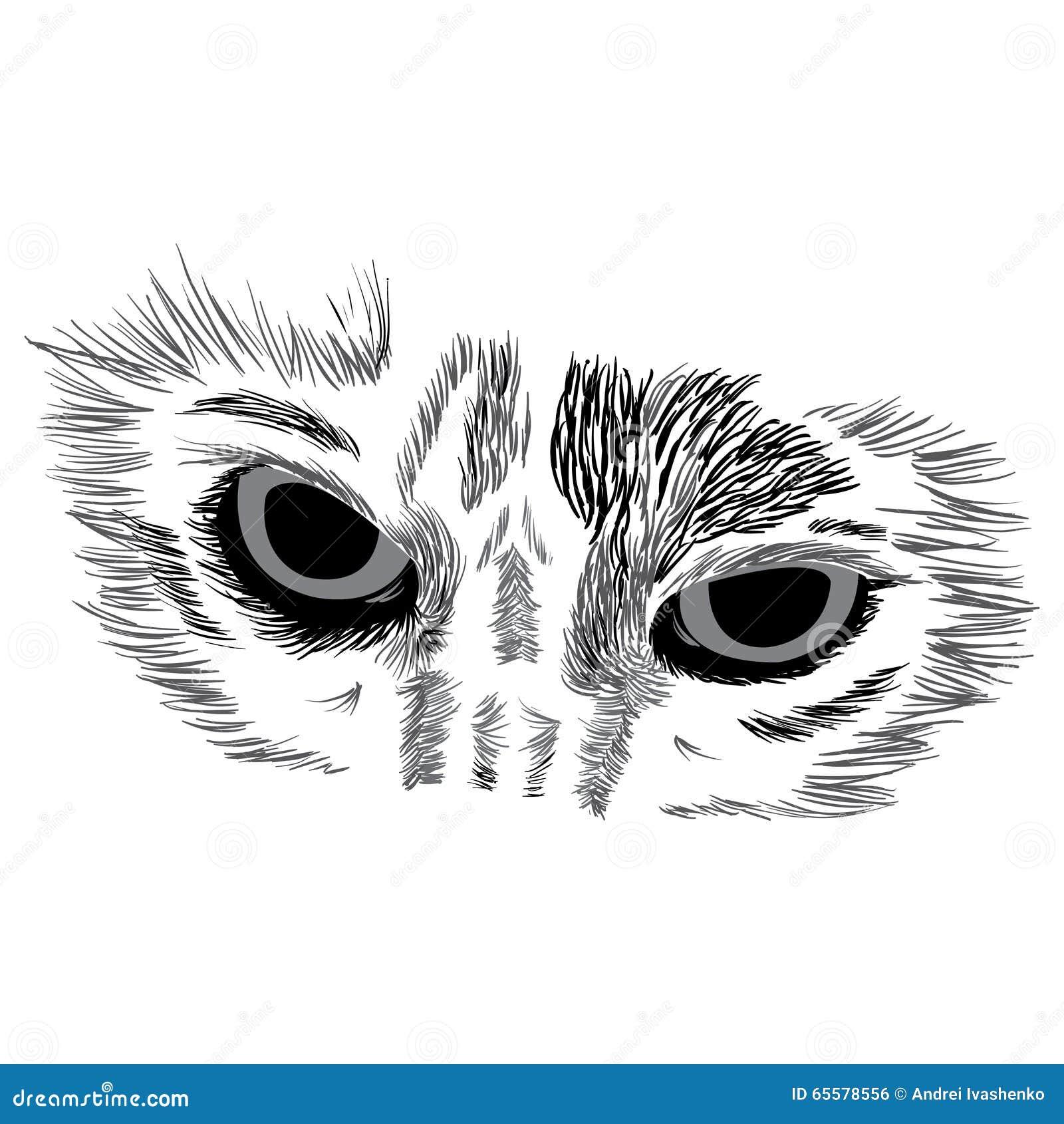 Cara do gato no branco