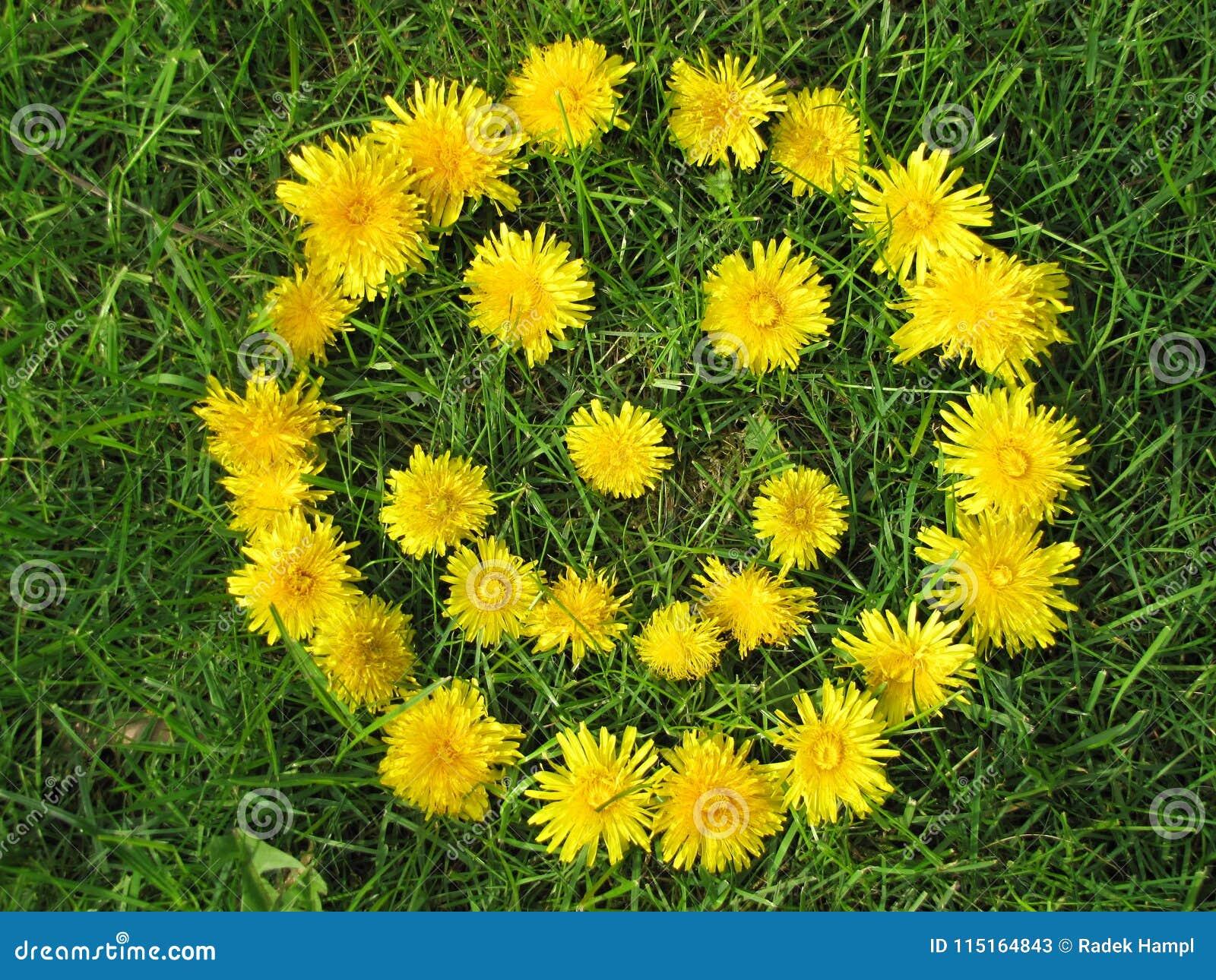 Cara do sorriso feita com os dentes-de-leão amarelos na mola