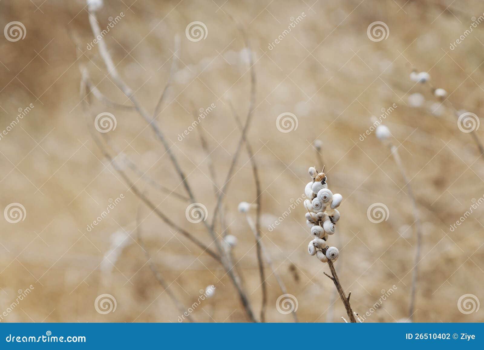 Caracóis minúsculos em plantas