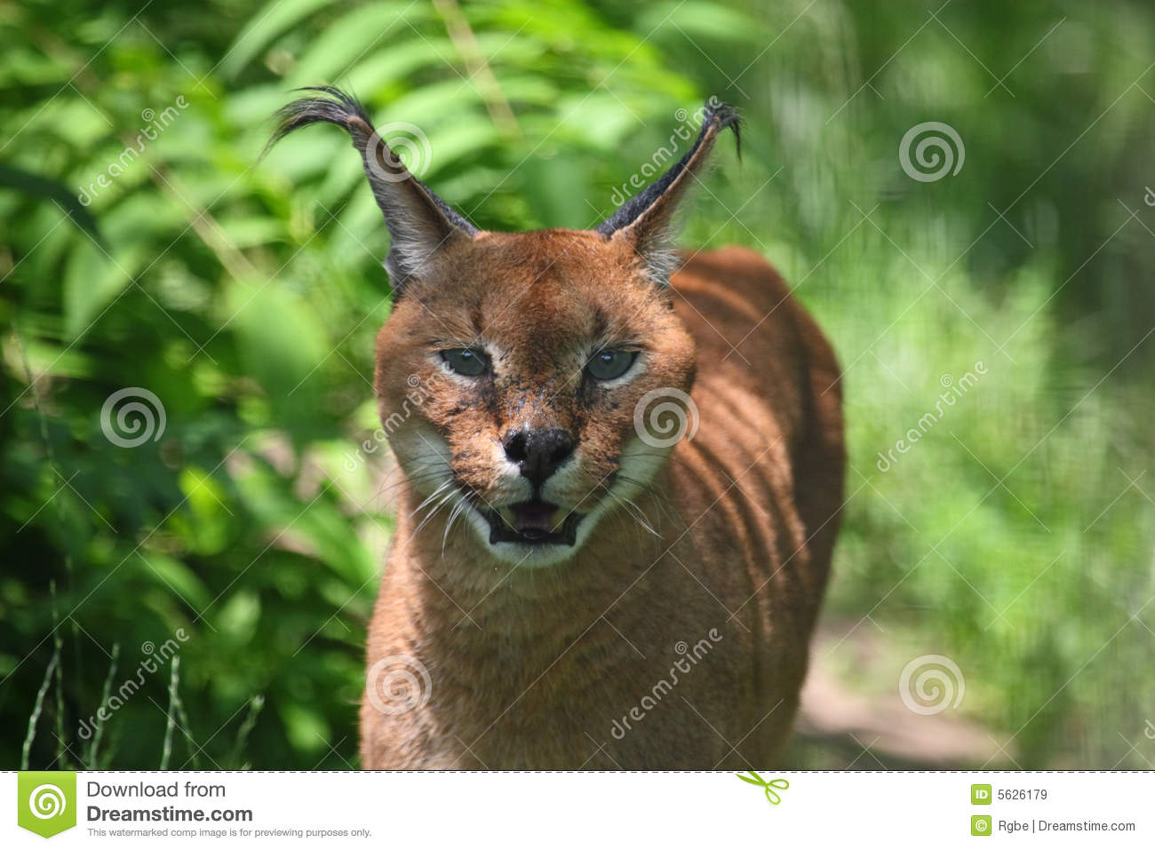 management plan for caracal In this paper we describe caracal, our implementation of a dynamic translation  to program many-core processors has become more critical opencl[7] is an open  we use a straightforward memory management algorithm uavs support .