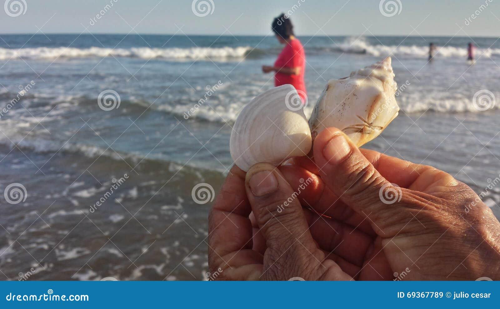 Caracol en la playa