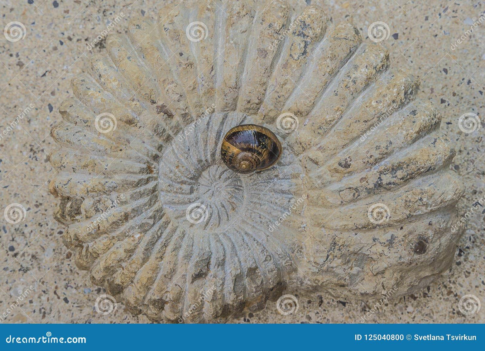 Caracol en la visión superior fósil grande