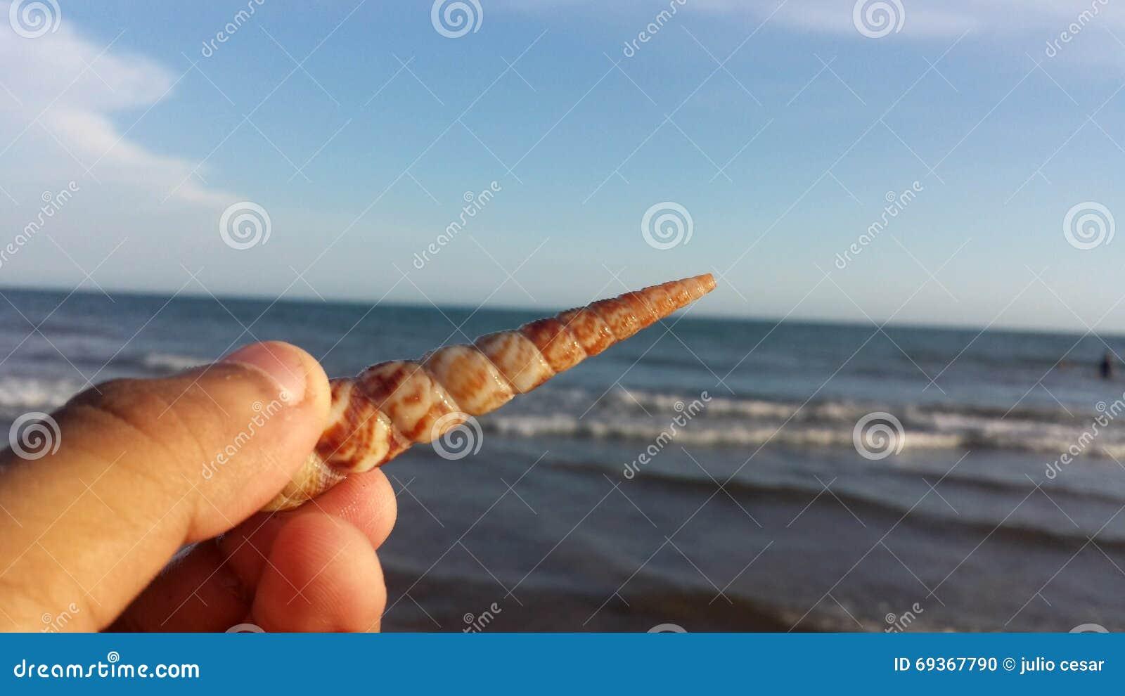 Caracol lindo en la playa