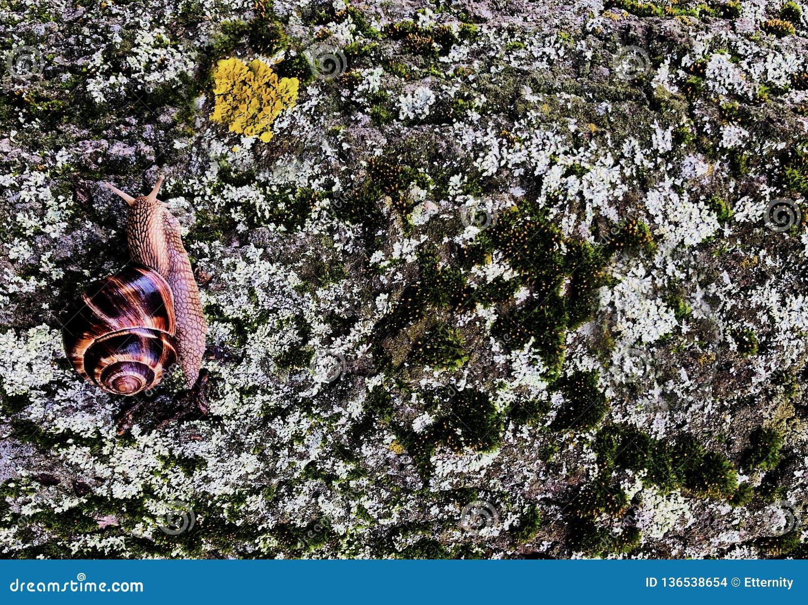 Caracol que se arrastra en una corteza de árbol enorme en un día de primavera brillante