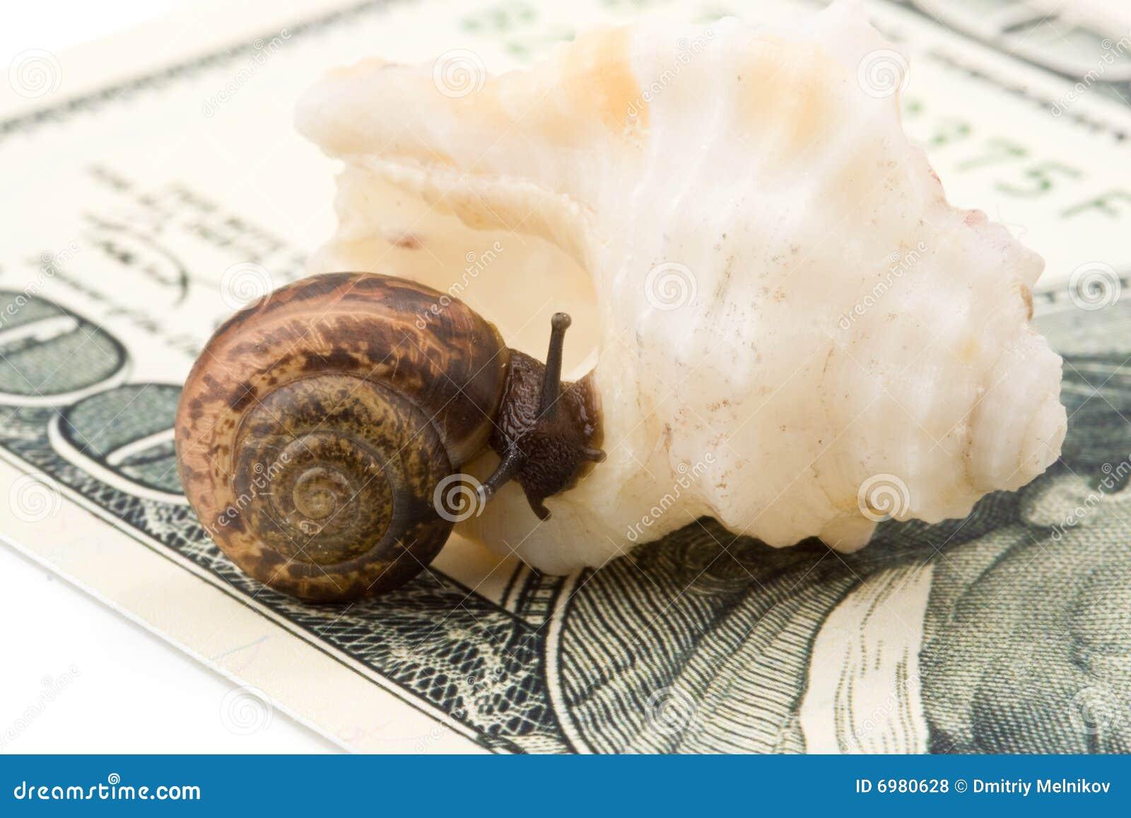 Caracol shell del mar y dinero fotos de archivo libres de for Caracol de jardin