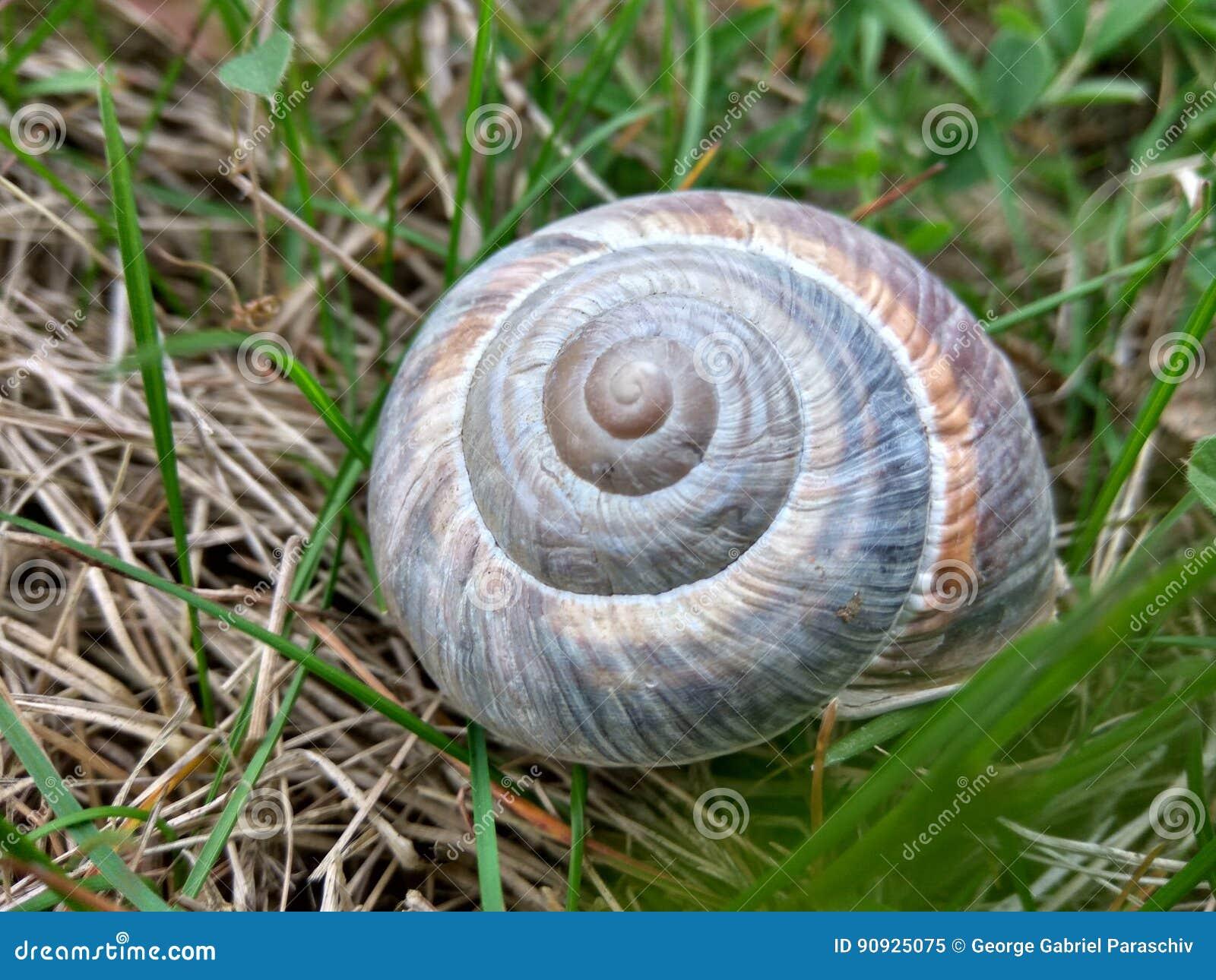Caracol Shell em um campo verde