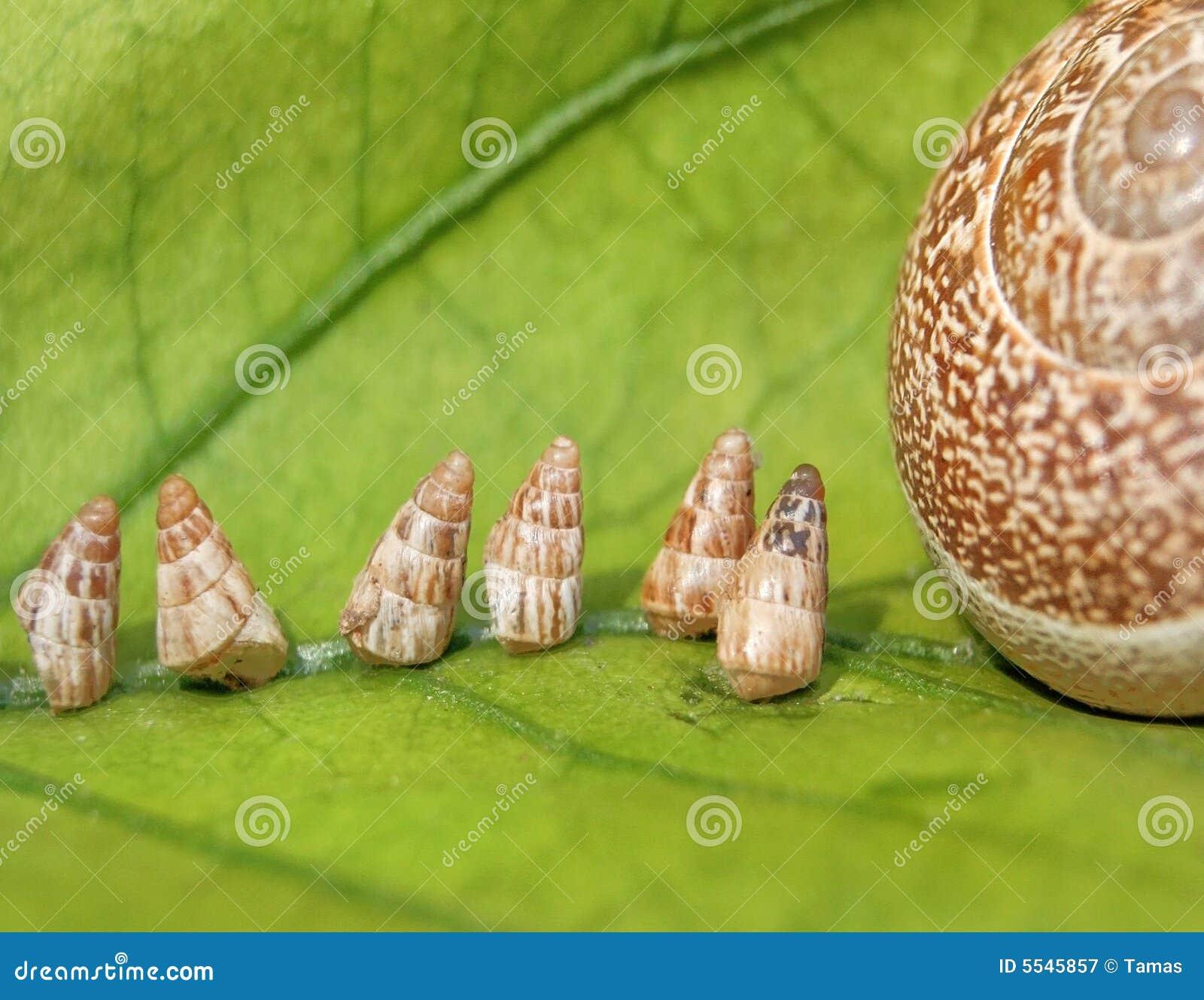 Caracoles de jard n del beb que van a casa fotograf a de for Caracoles de jardin