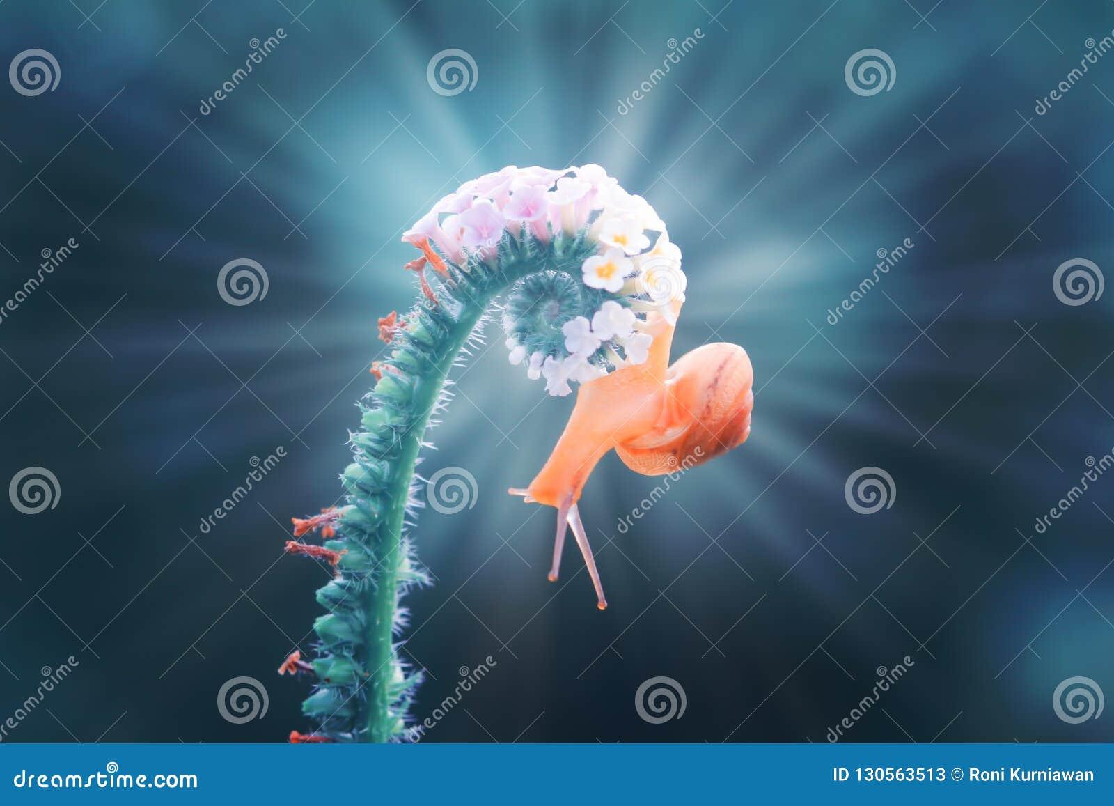 Caracoles, caracoles en flores con un fondo azul