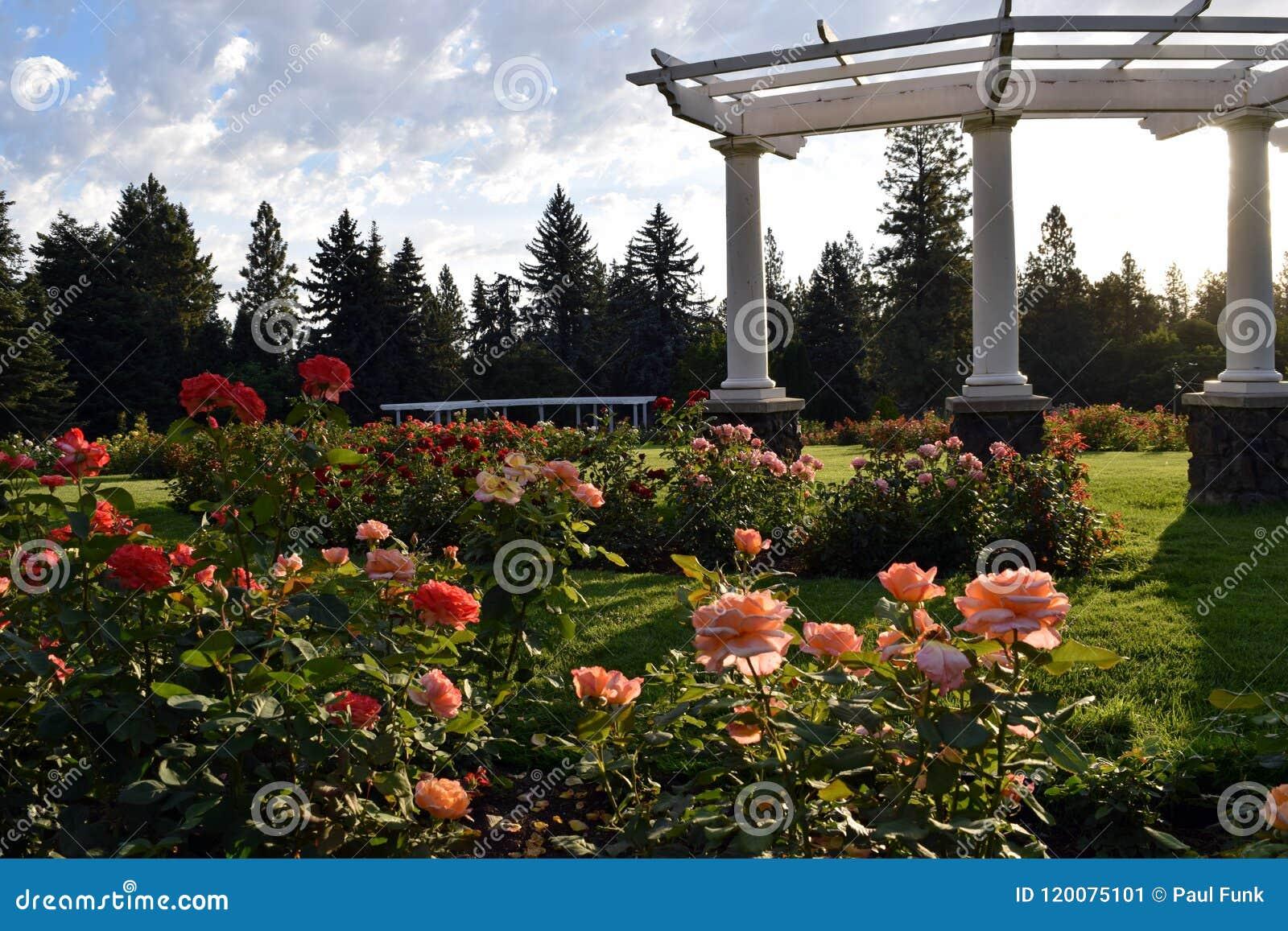 Caramanchão da coluna do Corinthian dos pinheiros do jardim de rosas